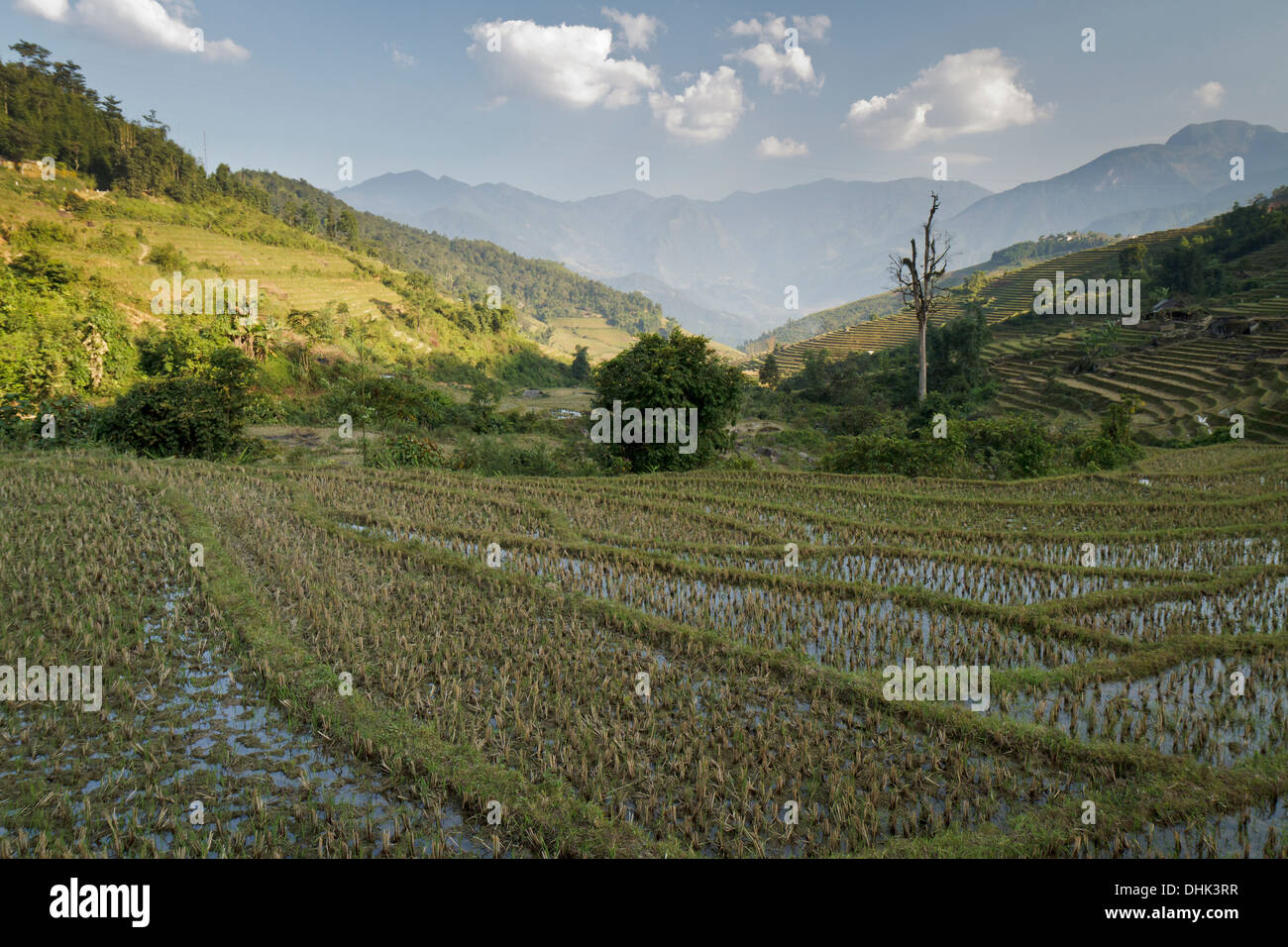 Stunning mountain scenery and many rice terraces in the North West of Vietnam, Lao Cai Province, near Sapa. - Stock Image