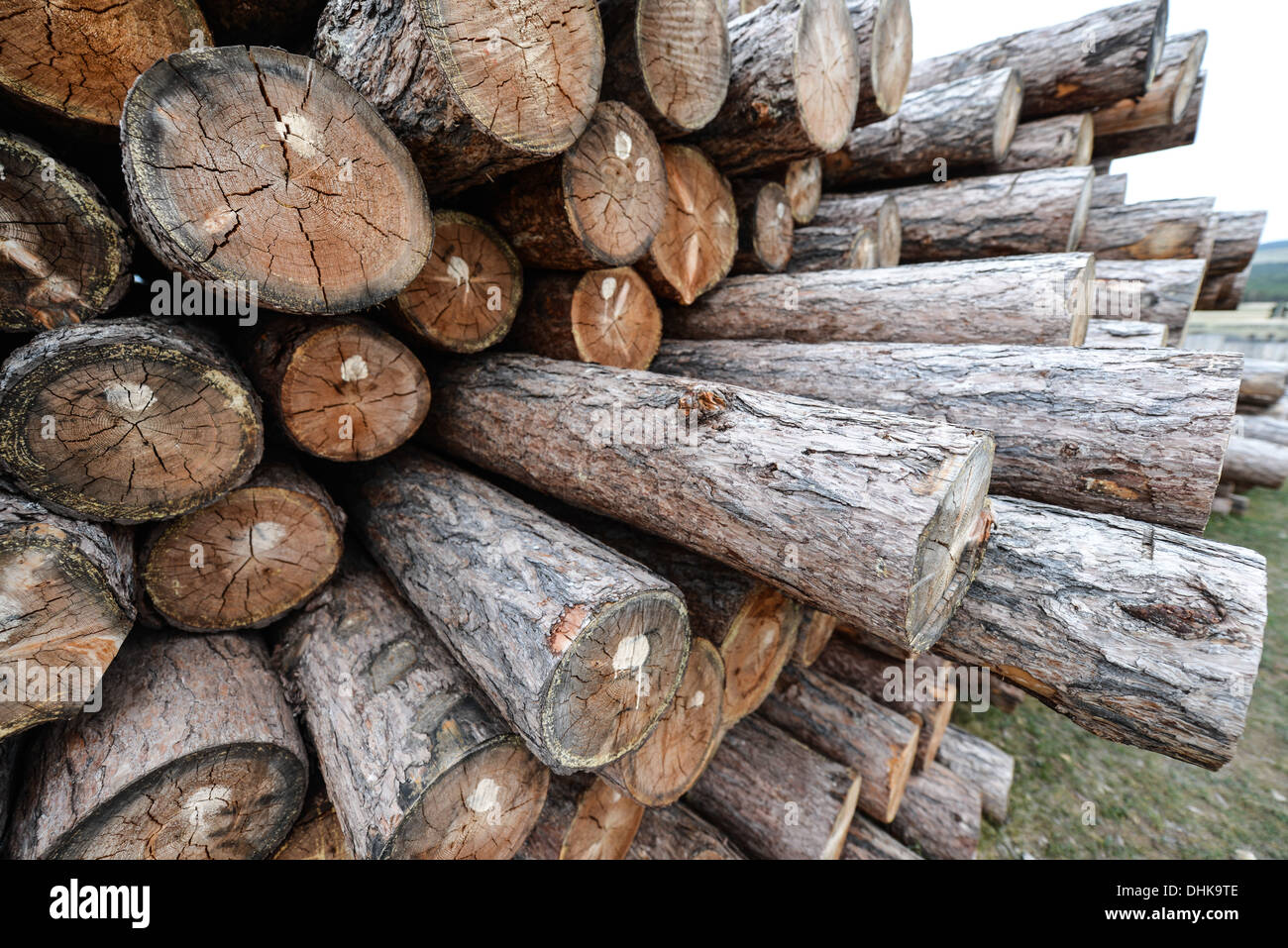 Cut Wooden Logs. Chopped Siberian Logs from Olkhon Island in Lake Baikal, Russia. - Stock Image