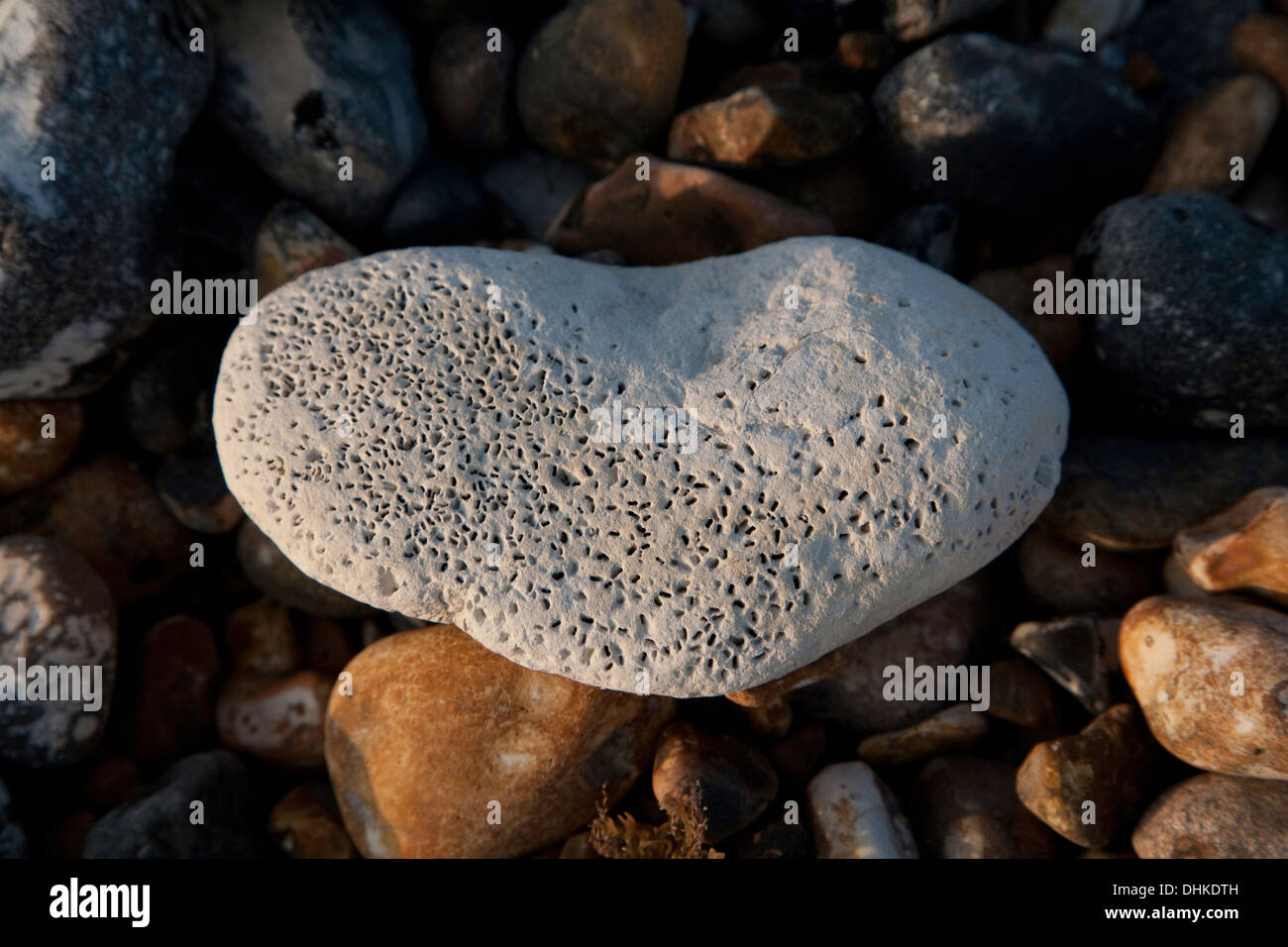 small bivalve holes in chalk stone - Stock Image