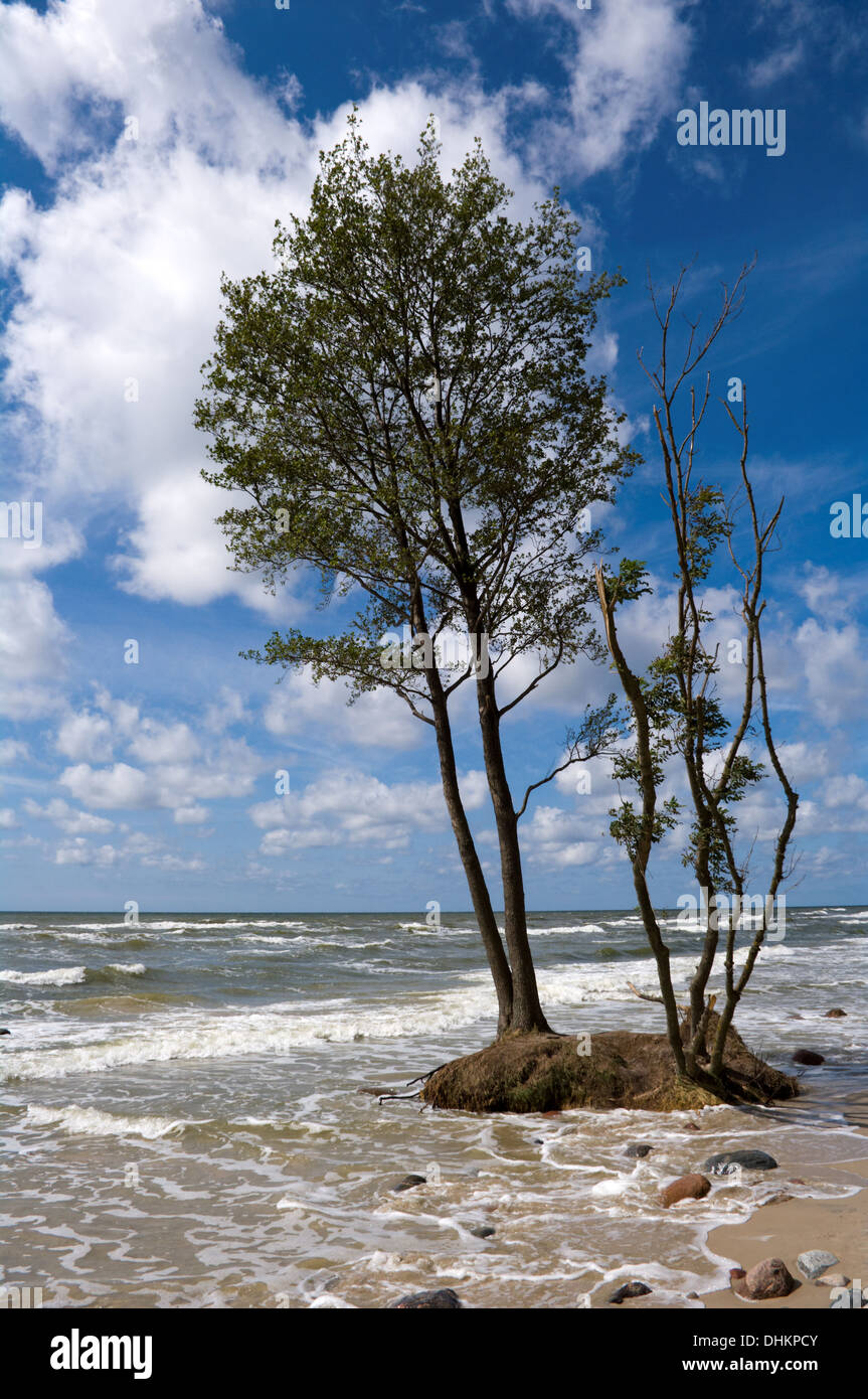 A global warming (Coast of the Baltic Sea) - Stock Image