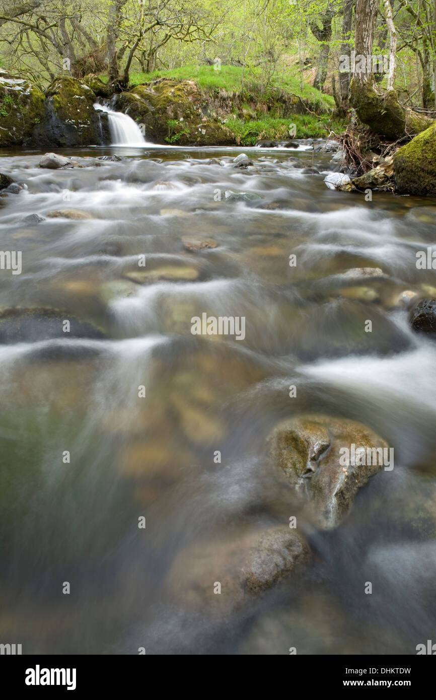A fast flowing section of Aira Beck as the water cascades around rocks in the stream Stock Photo