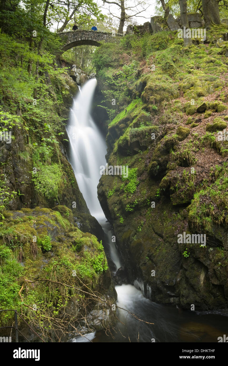 Two people looking from the stone bridge over Aira Force waterfall, Cumbria. The spring vegetation looks fresh and Stock Photo