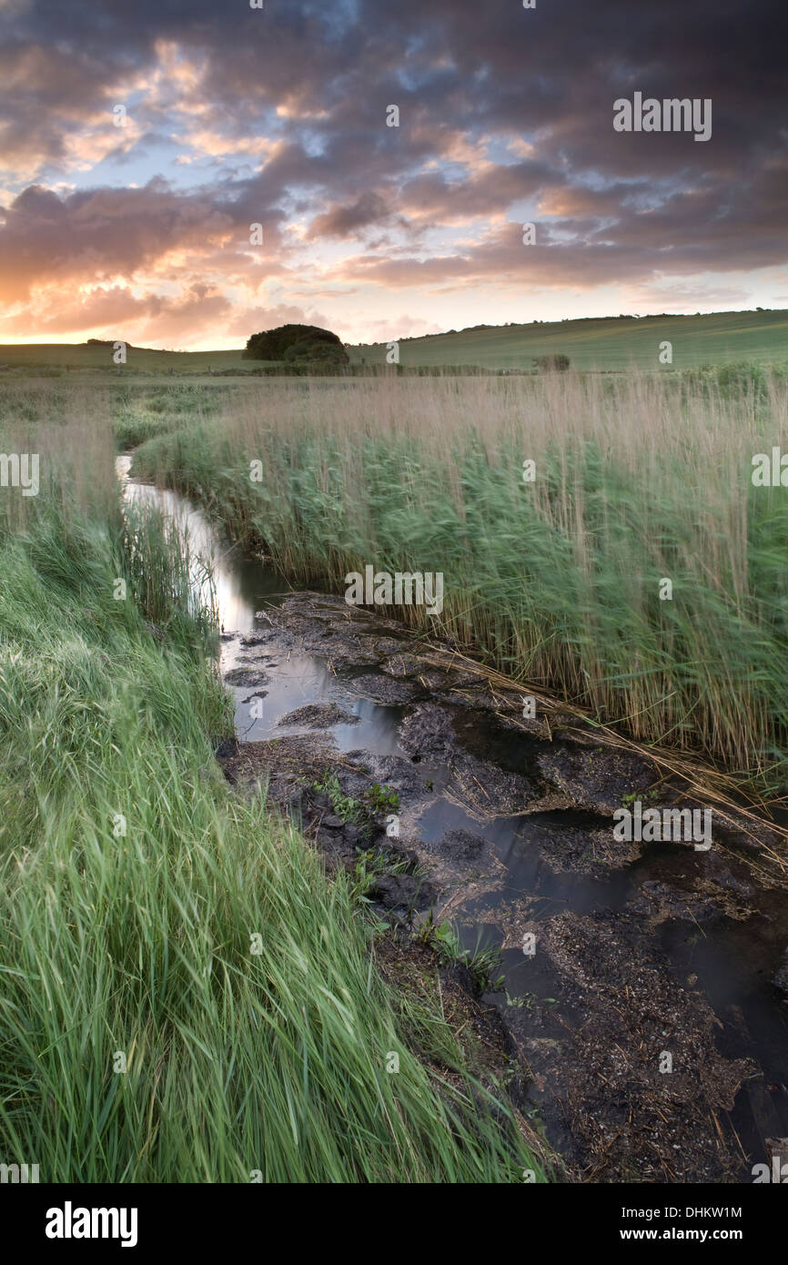 A stream meanders through the reeds into the Fleet lagoon, Dorset, England, at sunrise Stock Photo