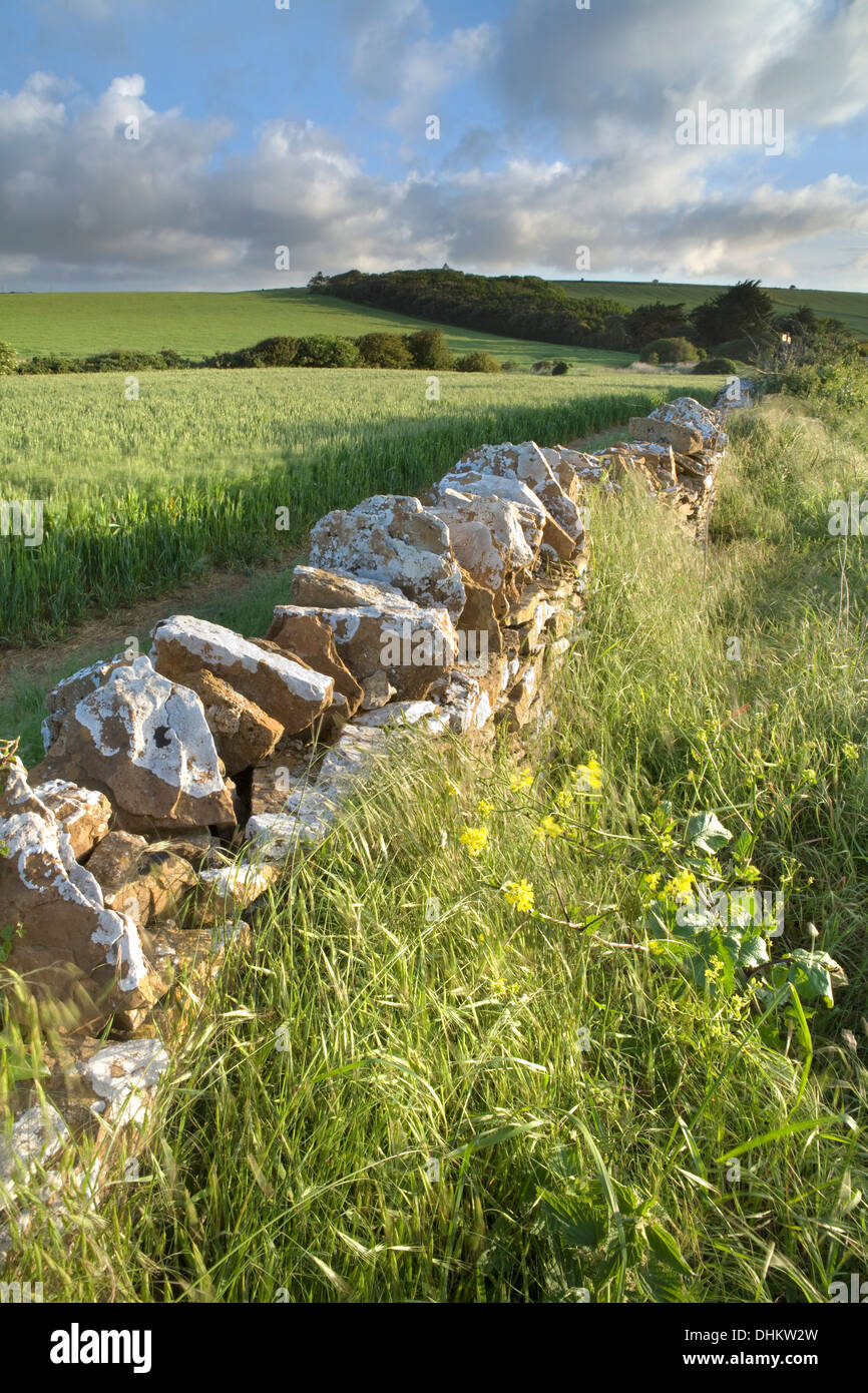 Early morning sunlight shines on a dry stone wall near West Fleet, Chesil, Dorset. Stock Photo
