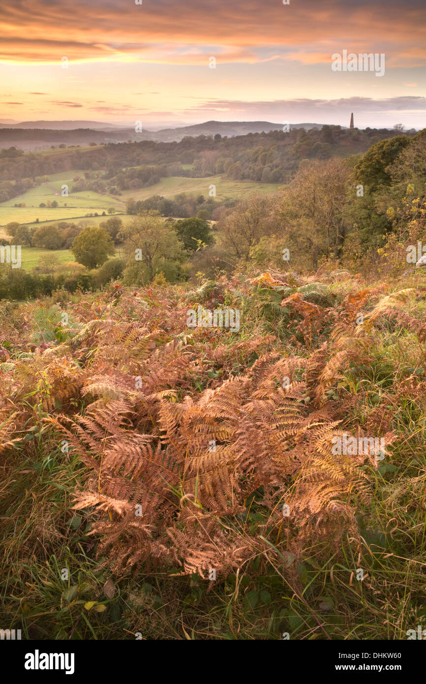 Photograph of Bracken taken from Midsummer Hill on the Malvern Hills, Herefordshire, at sunset looking towards Eastnor. Stock Photo