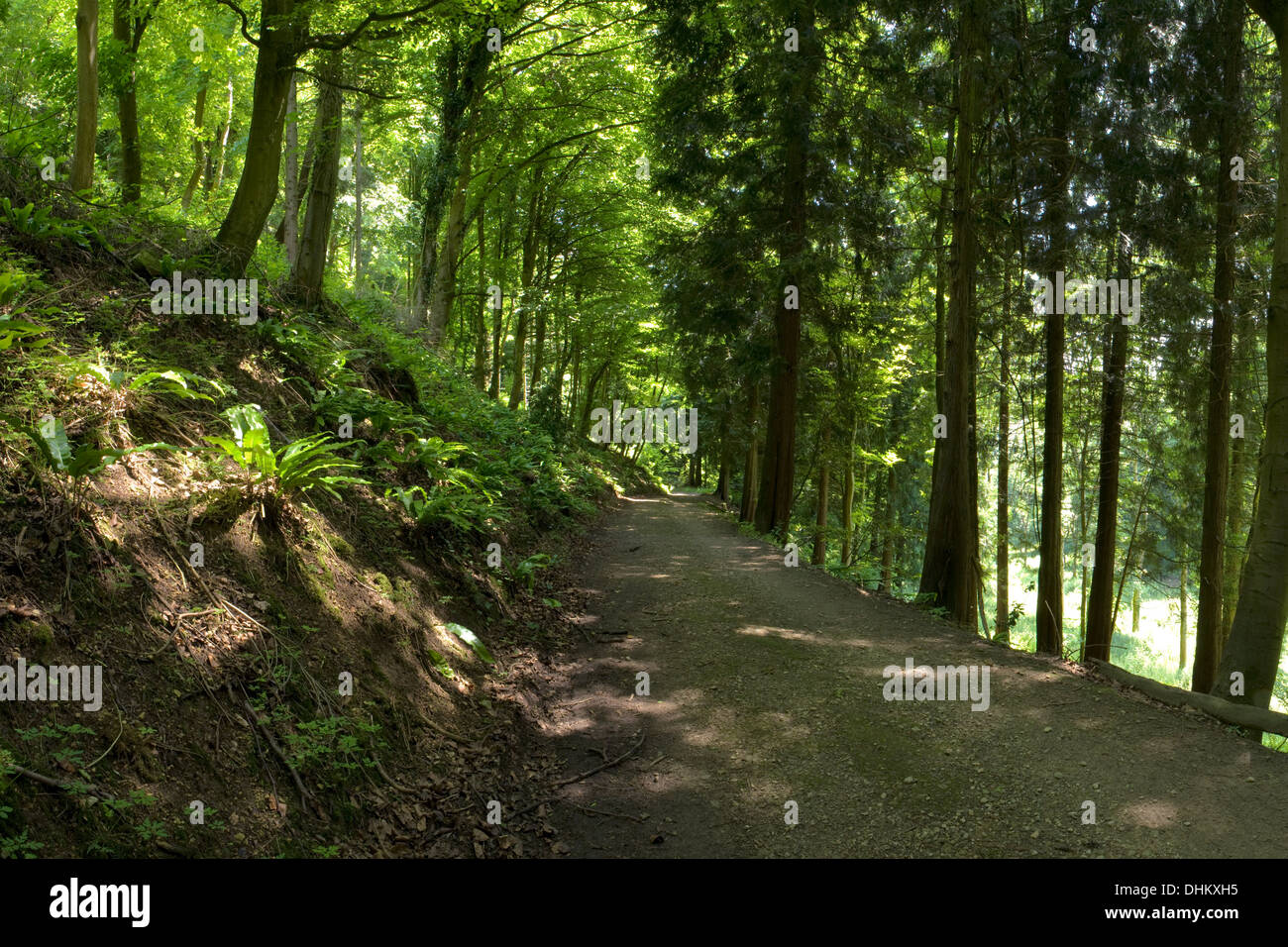 Woodland path/drive between the trees at Woodchester Park Stock Photo