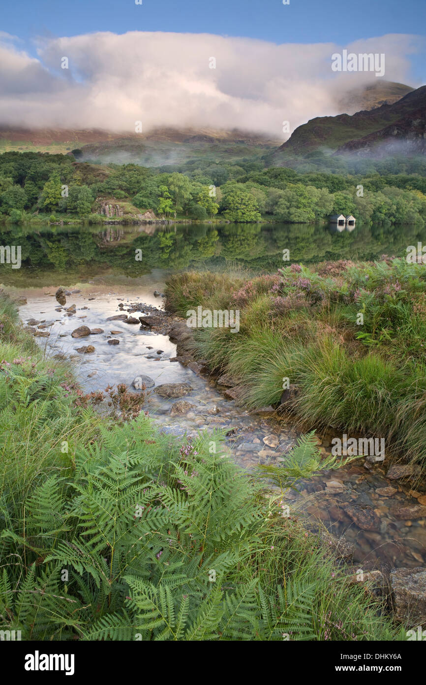 A stream flows into Llyn Dinas Snowdonia. Yr Aran is lit up by the morning sun and is partially obscured by the Stock Photo