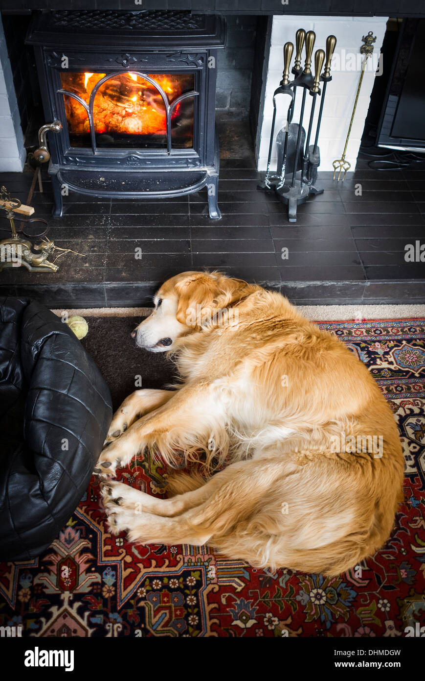 Golden Retriever dog asleep on hearth in front of a wood log fire in UKn - Stock Image