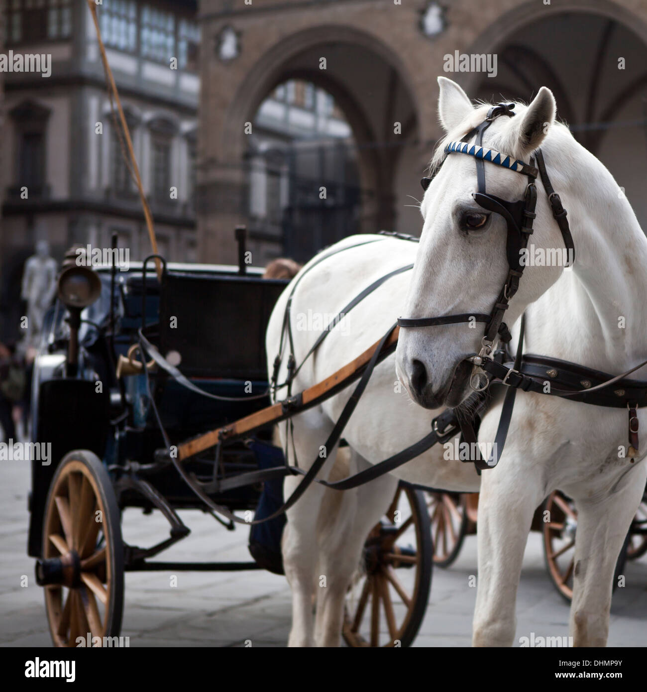 White Horse And Carriage Stock Photo Alamy