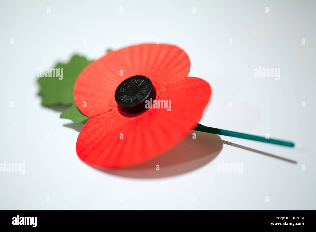 Poppy appeal poppy on white background - Stock Image