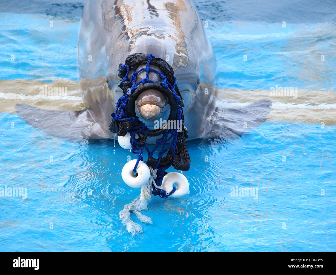 dolphin stach n the fishing net  - Stock Image