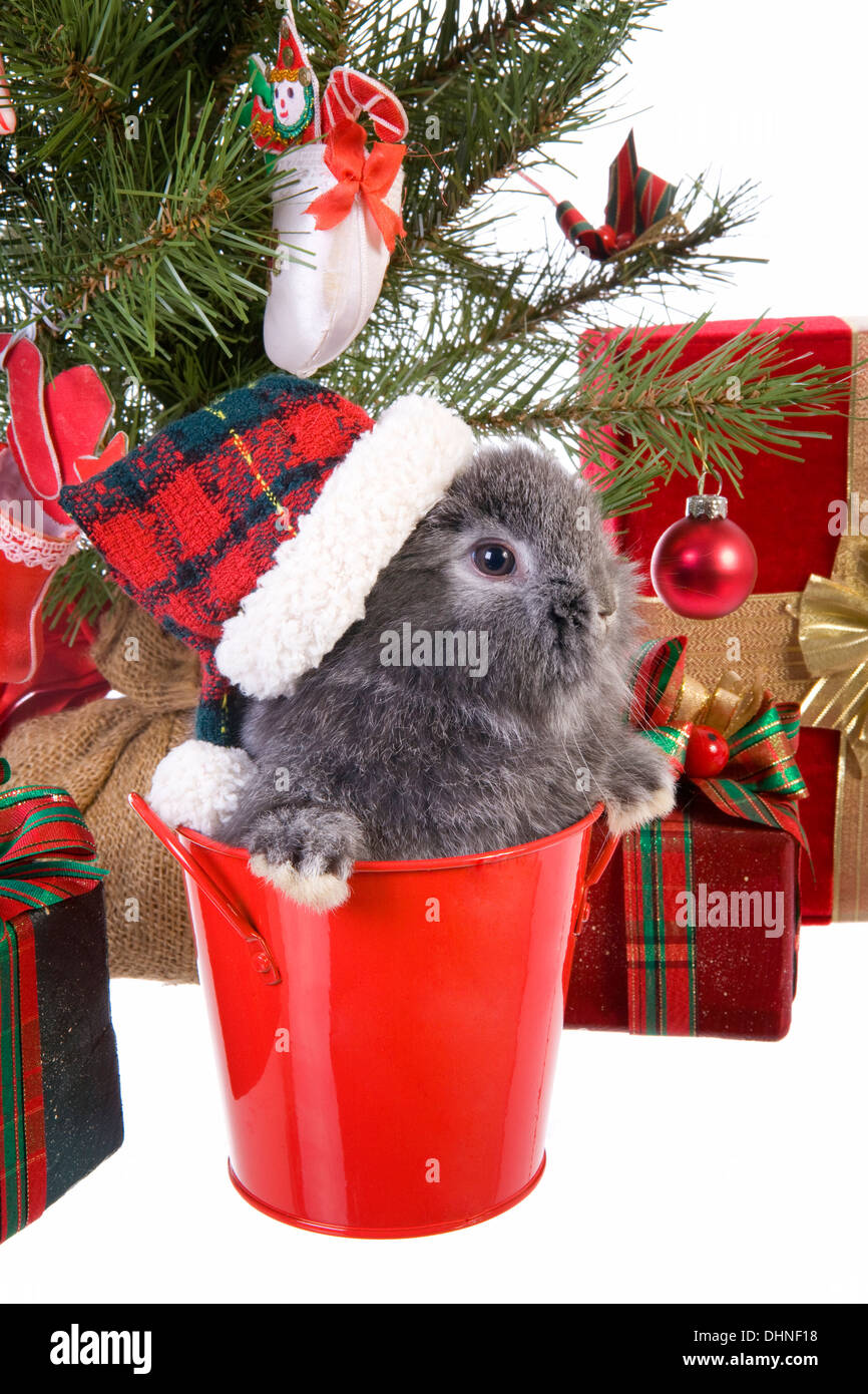 cute christmas grey mini lop baby bunny rabbit wearing hat. Black Bedroom Furniture Sets. Home Design Ideas
