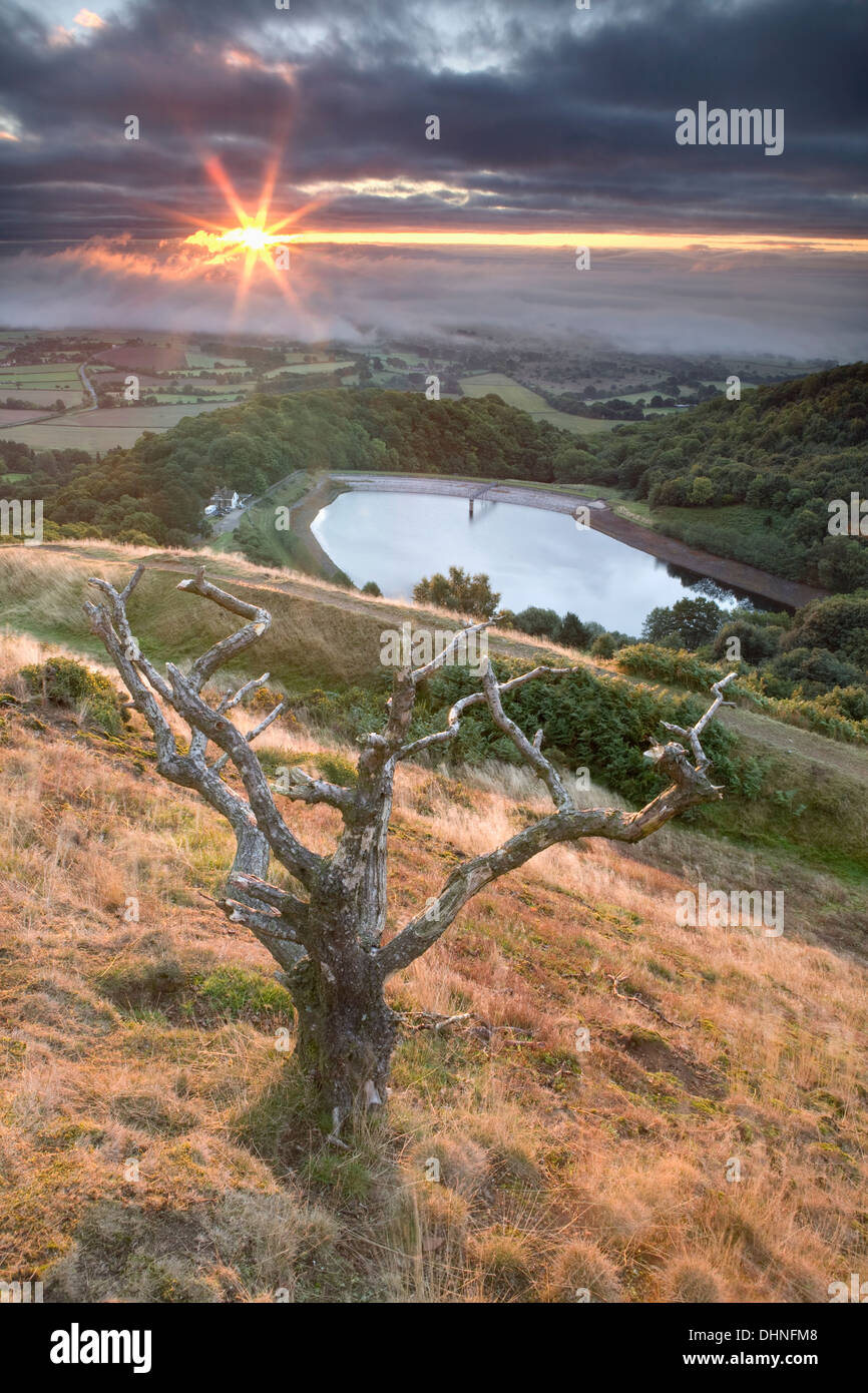 A dead Hawthorn tree overlook the reservoir at British Camp, Malvern Hills, at sunrise with fog that is engulfing Hanley Swan. - Stock Image