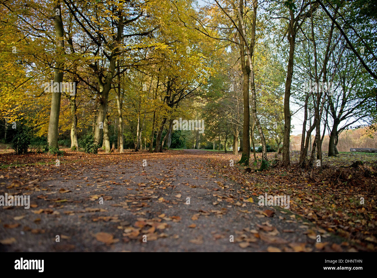 Tilgate Park, Crawley, West Sussex, England, Uk - Stock Image