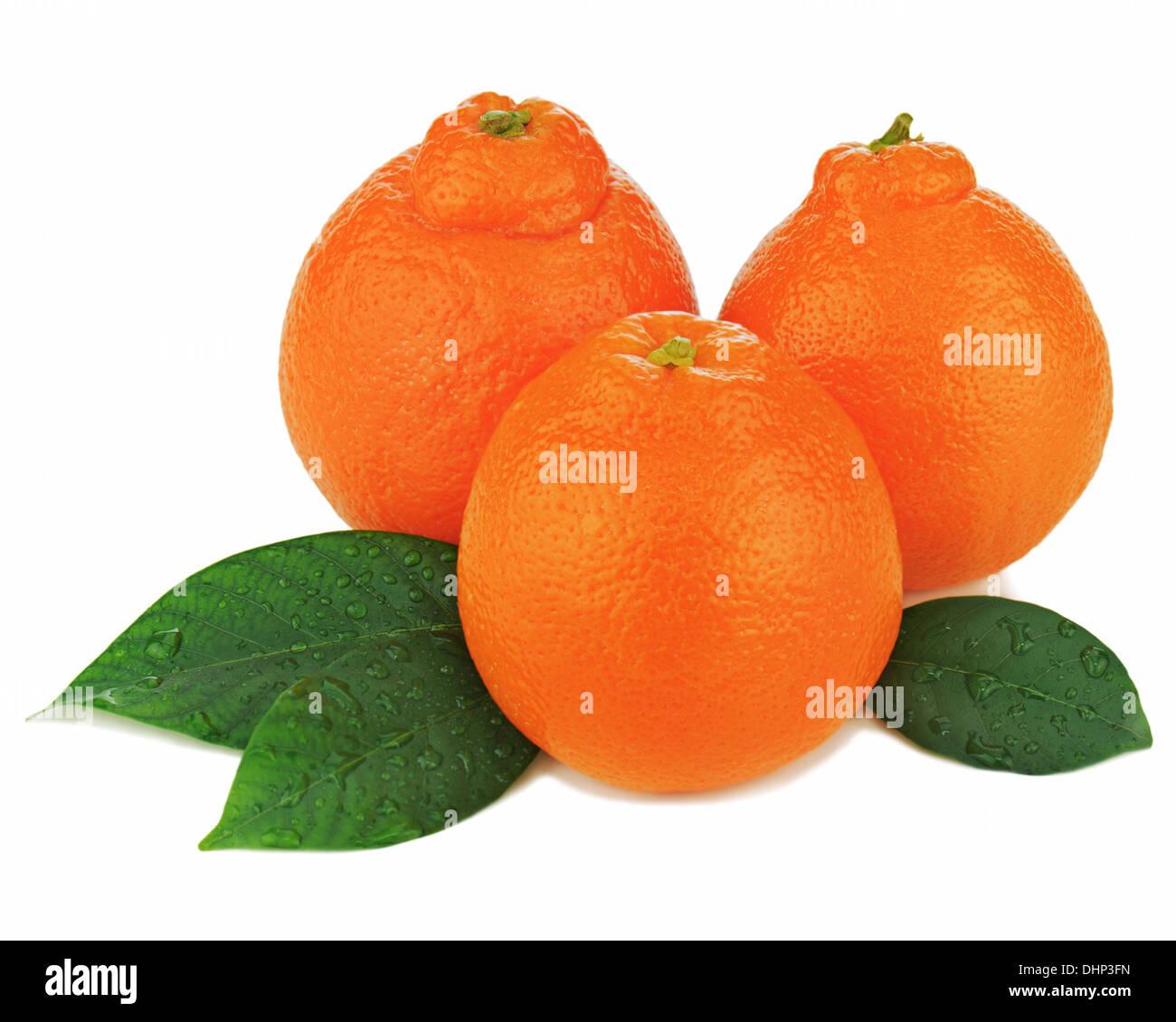 Ripe mineola fruits with green leaves isolated on white background. - Stock Image