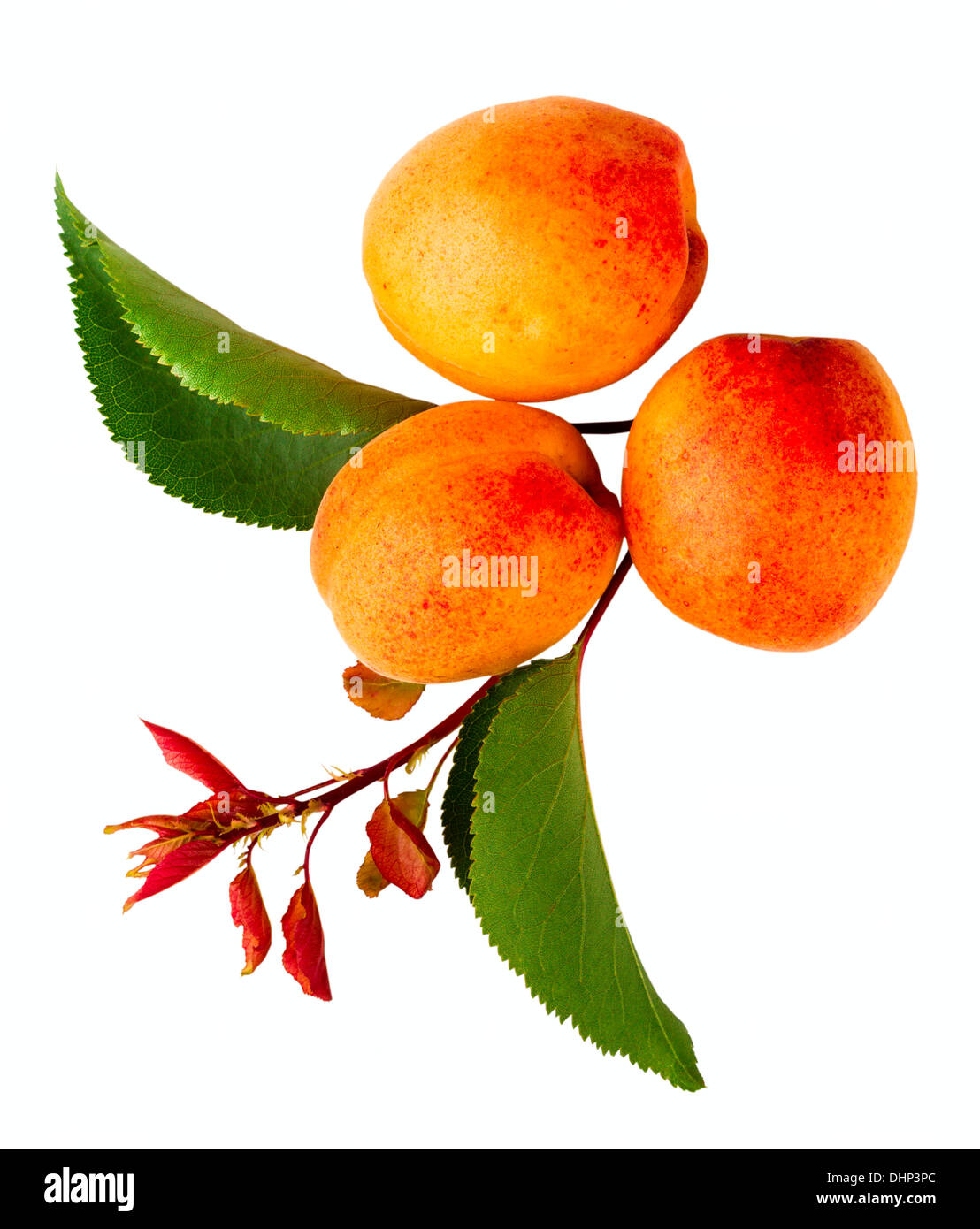 apricot fruits isolated on white background - Stock Image