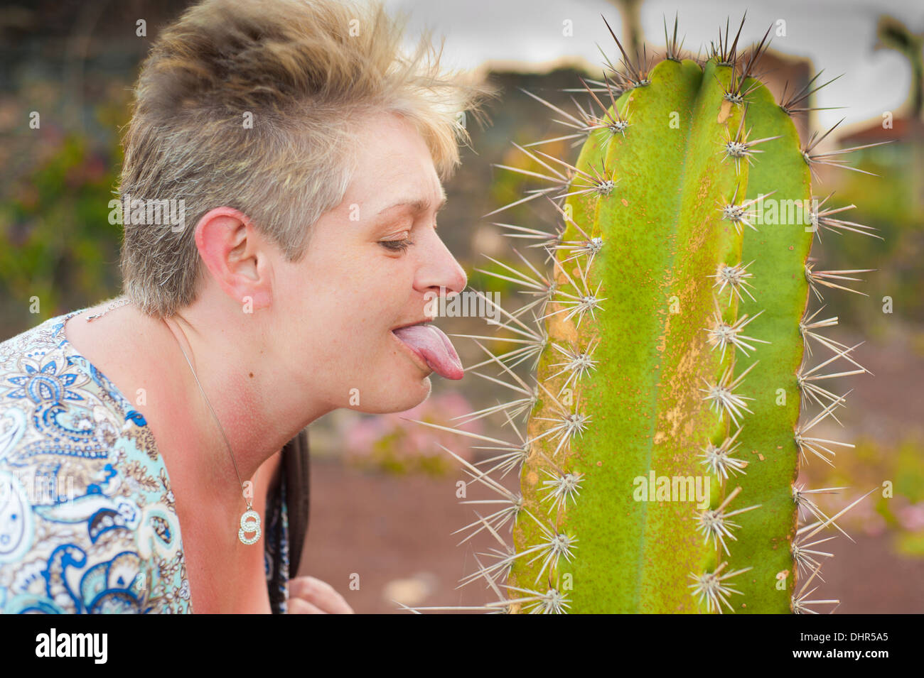 Female sticking tongue out licking a cactus with big spikes - Stock Image