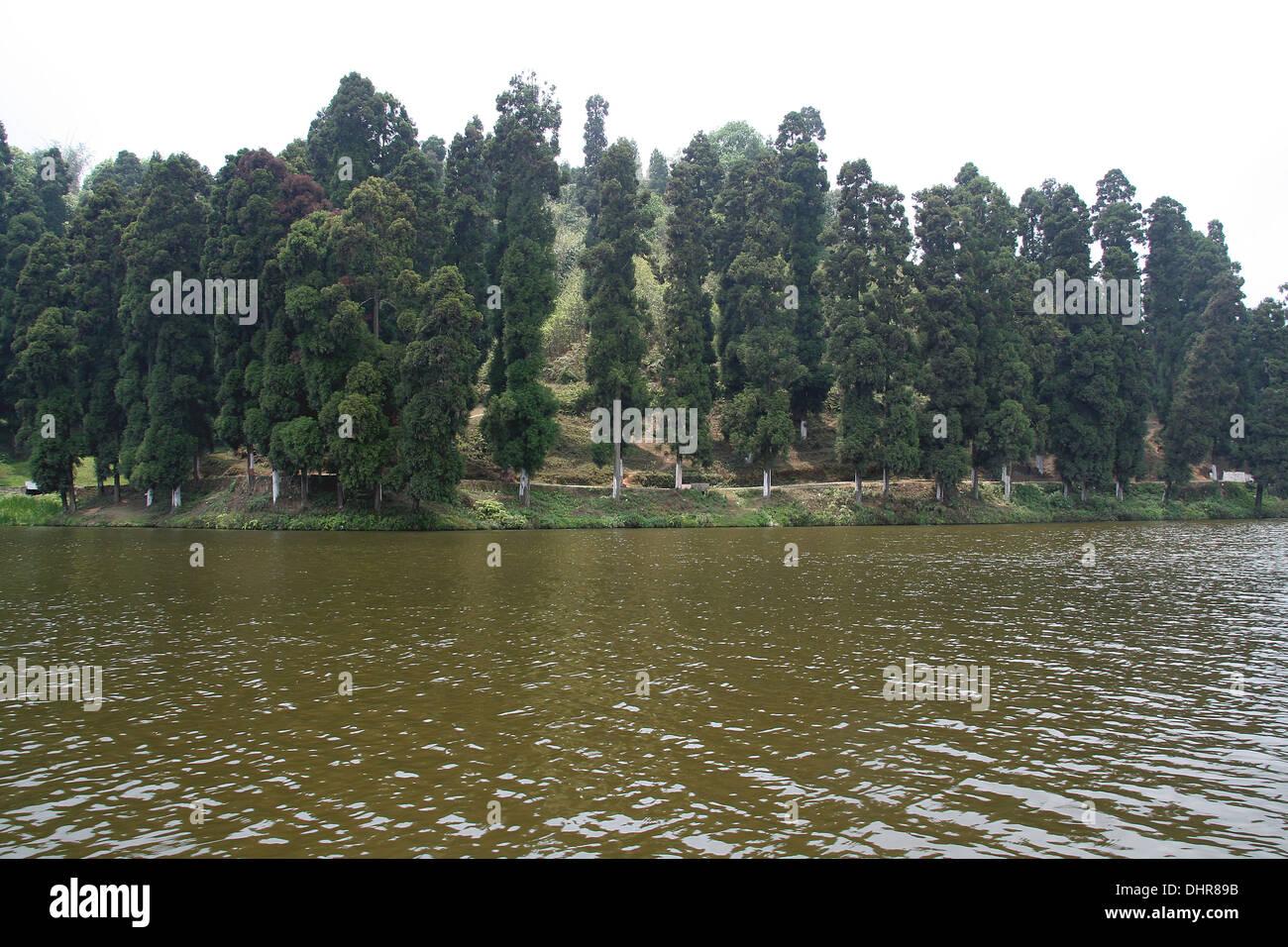 Pine trees standing aloft on bank of lake - Stock Image