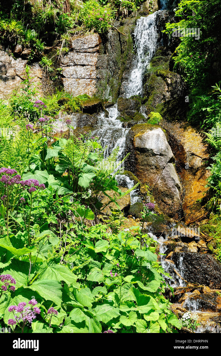 Mountain stream in the Black Forest Germany - Stock Image