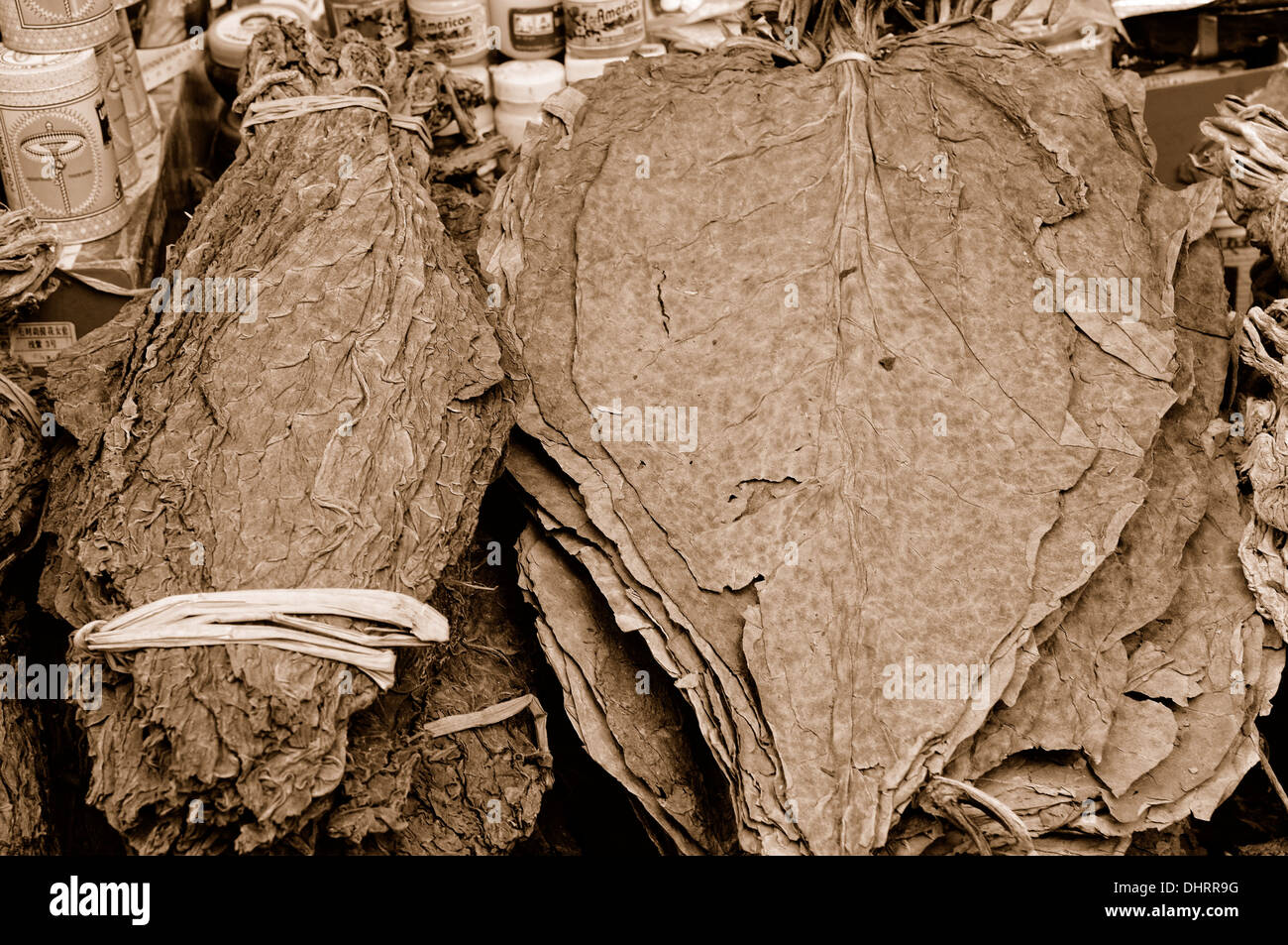 dry tobacco leaves Lhasa market sepia - Stock Image