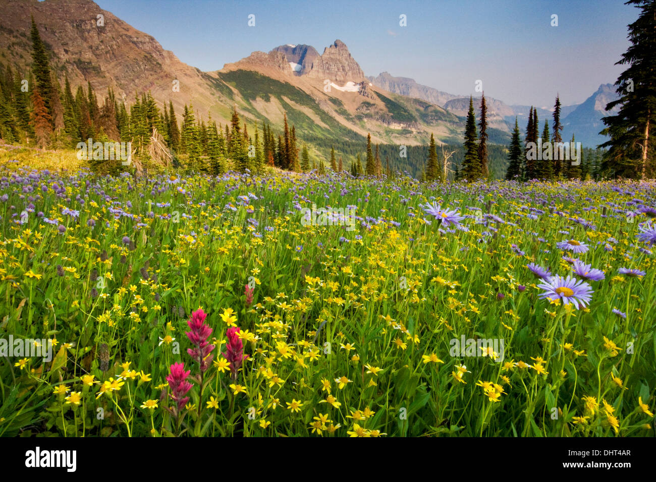 rocky mountain meadow flowers usa stock photos amp rocky