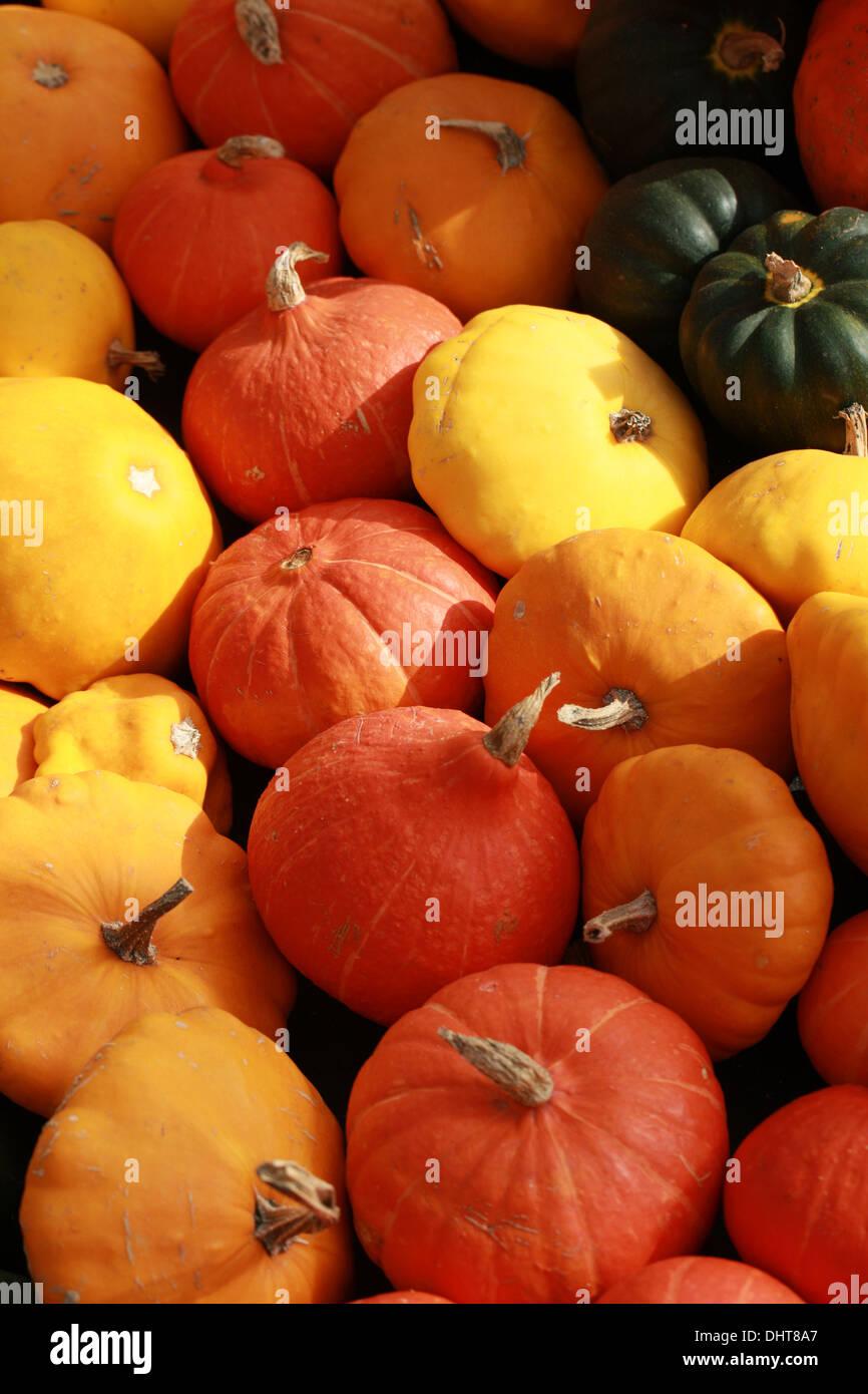 Scallop Pumpkins, Cucurbita pepo var. clypeata, Acorn Squash, Cucurbita pepo var. turbinata, and Munchkin Squash, Cucurbita pepo - Stock Image