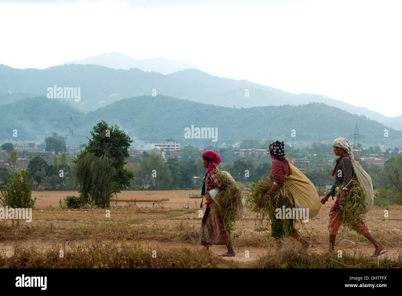 Farmers back to home with grass for livestock in Nepal. - Stock Image