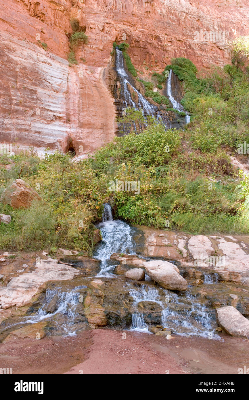 Vasey's Paradise Springs and waterfalls in the Redwall section of the Grand Canyon, Arizona, USA - Stock Image