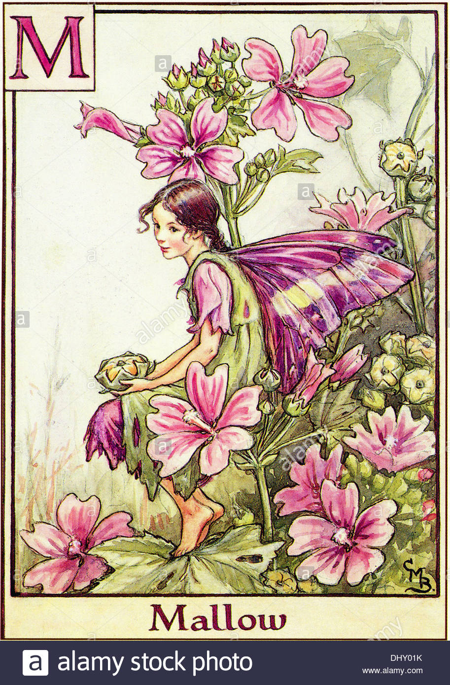 Flower Fairies Illustration by Cicely Mary Barker - The Mallow Fairy, 1934 - Stock Image