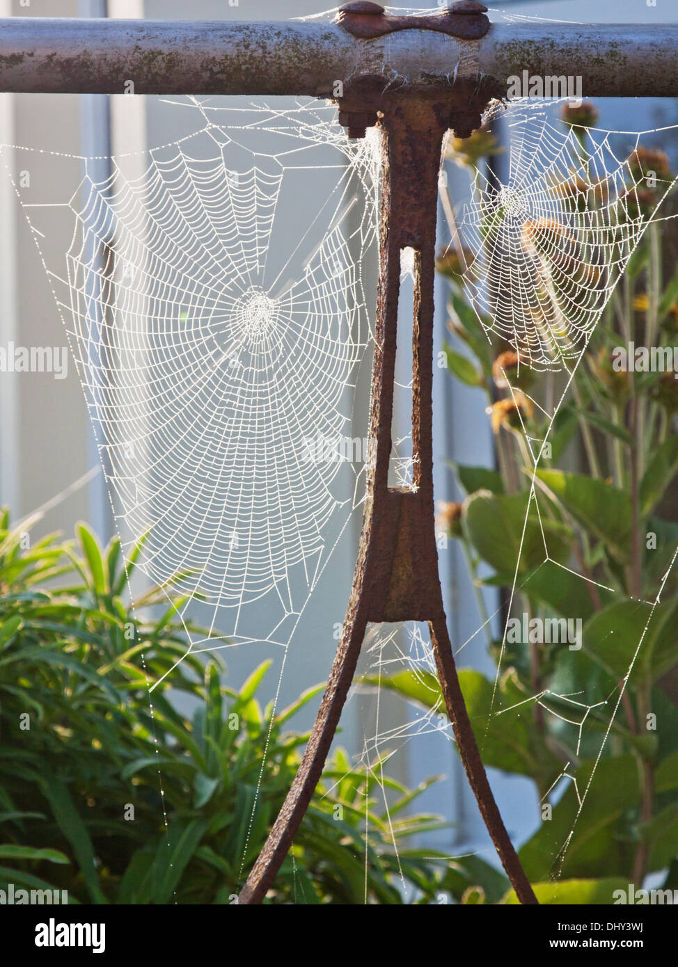 Spiders' webs attached to an old garden roller glistening with dew in the early morning sunlight - Stock Image