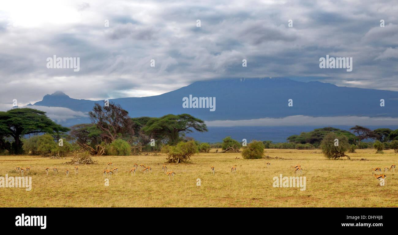 Amboseli National Park, Kenya - Stock Image