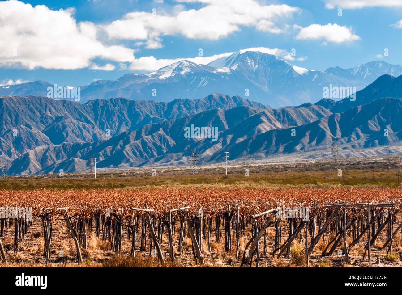 Volcano Aconcagua and Vineyard. Argentine province of Mendoza - Stock Image