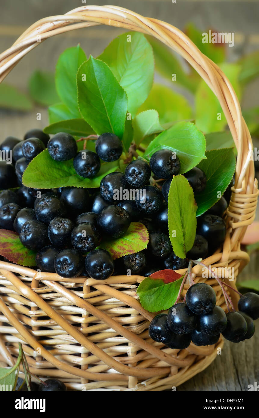 Black chokeberry in the basket on wooden table - Stock Image