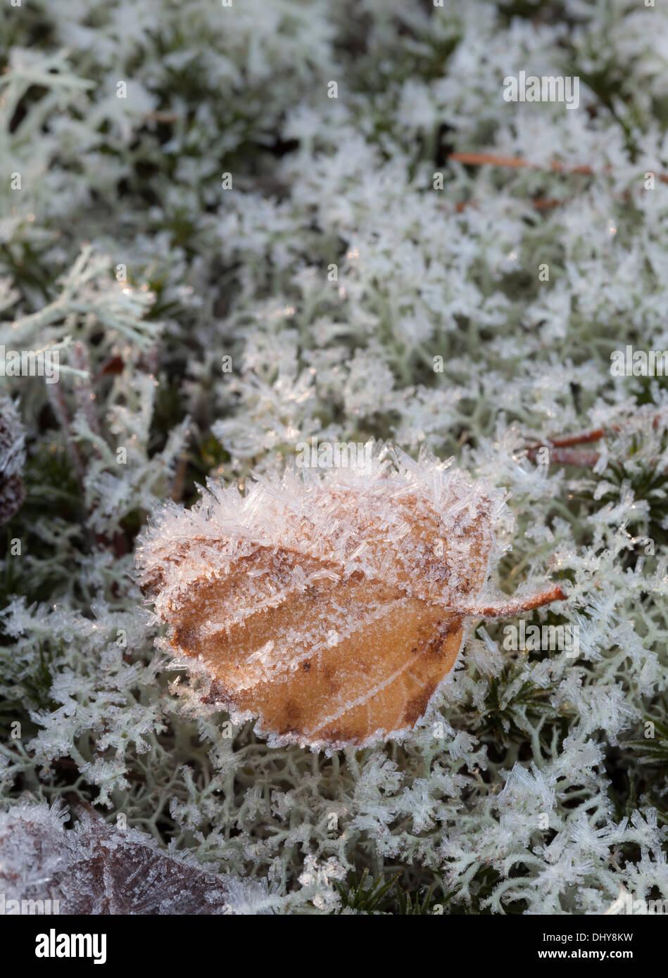 Beautiful autumn in Finland Stock Photo