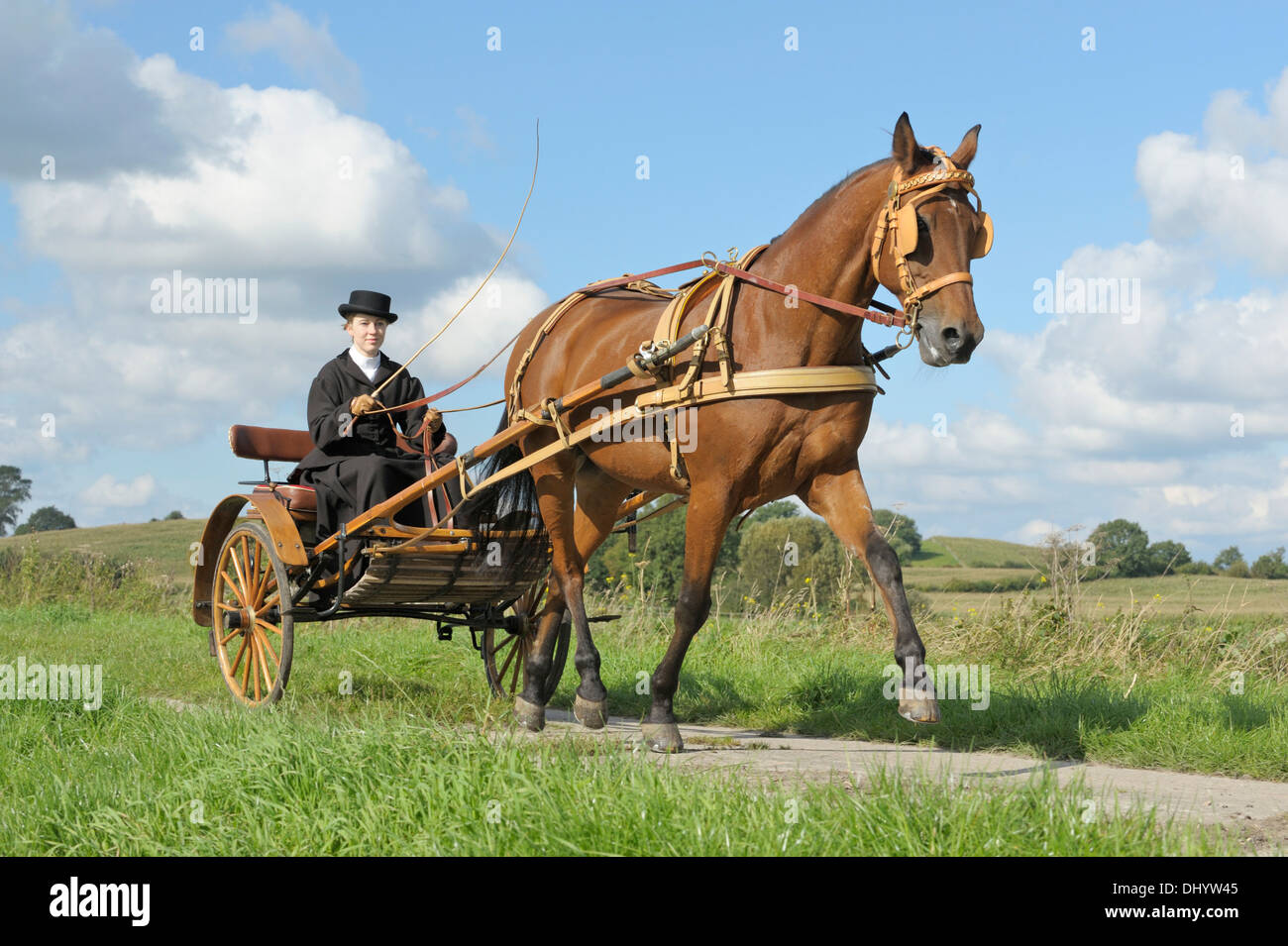 American Standardbred horse drawing a gig made 1920 in Mailand - Stock Image