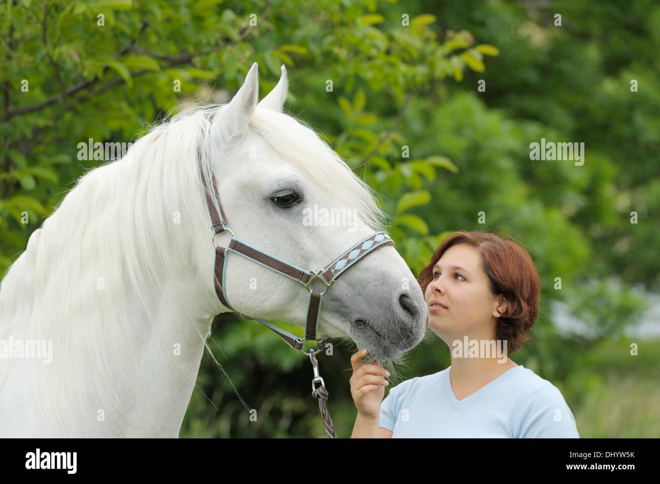 Woman and a Connemara pony stallion - Stock Image