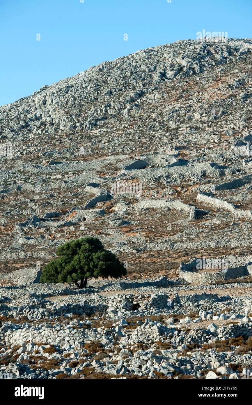 Griechenland, Dodekanes, Insel Chalki, steinige Berglandschaft mit Trockensteinmauern die die Felder umfassten - Stock Image