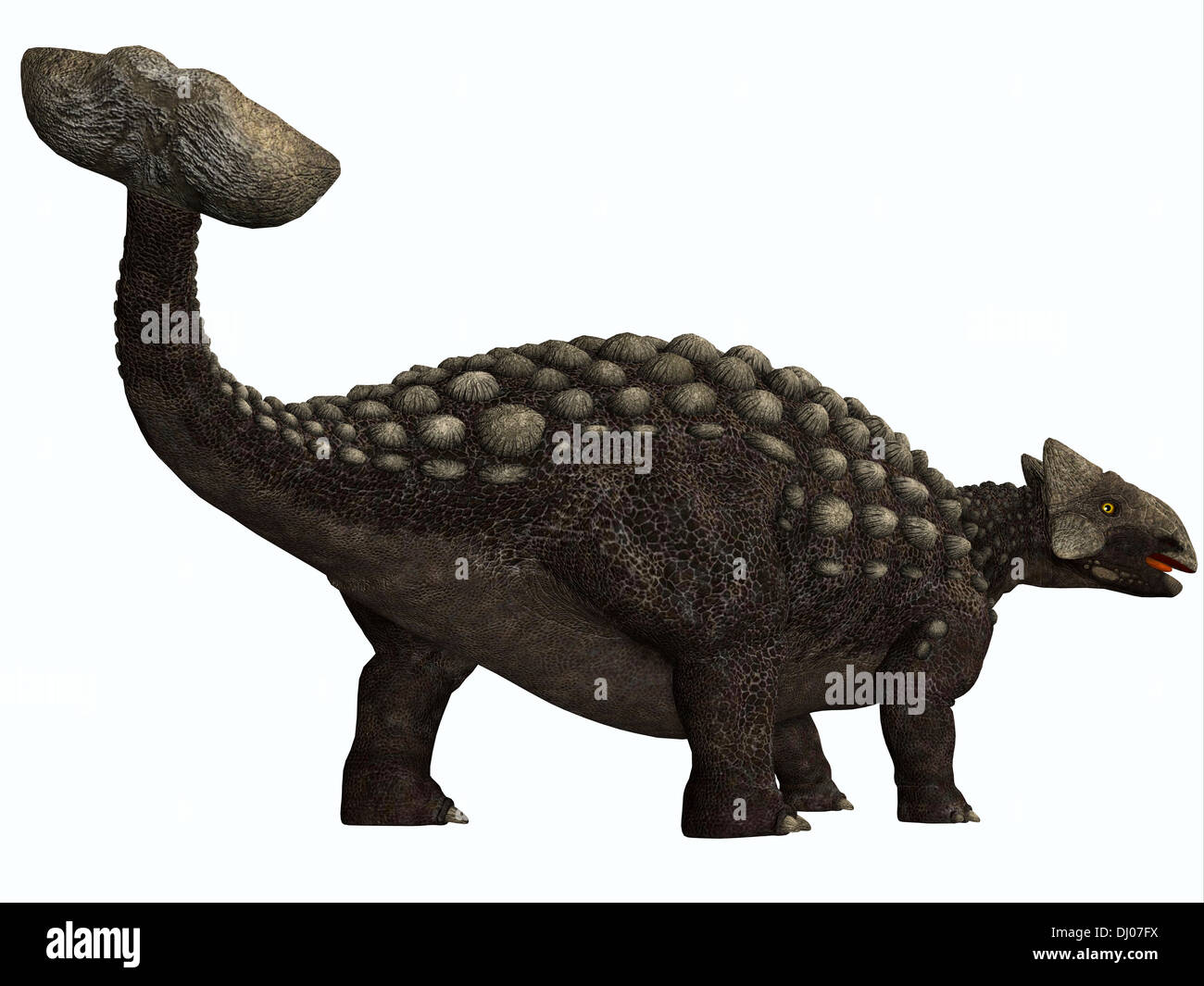 Ankylosaurus was a heavily armored herbivore dinosaur from the Cretaceous Period. - Stock Image