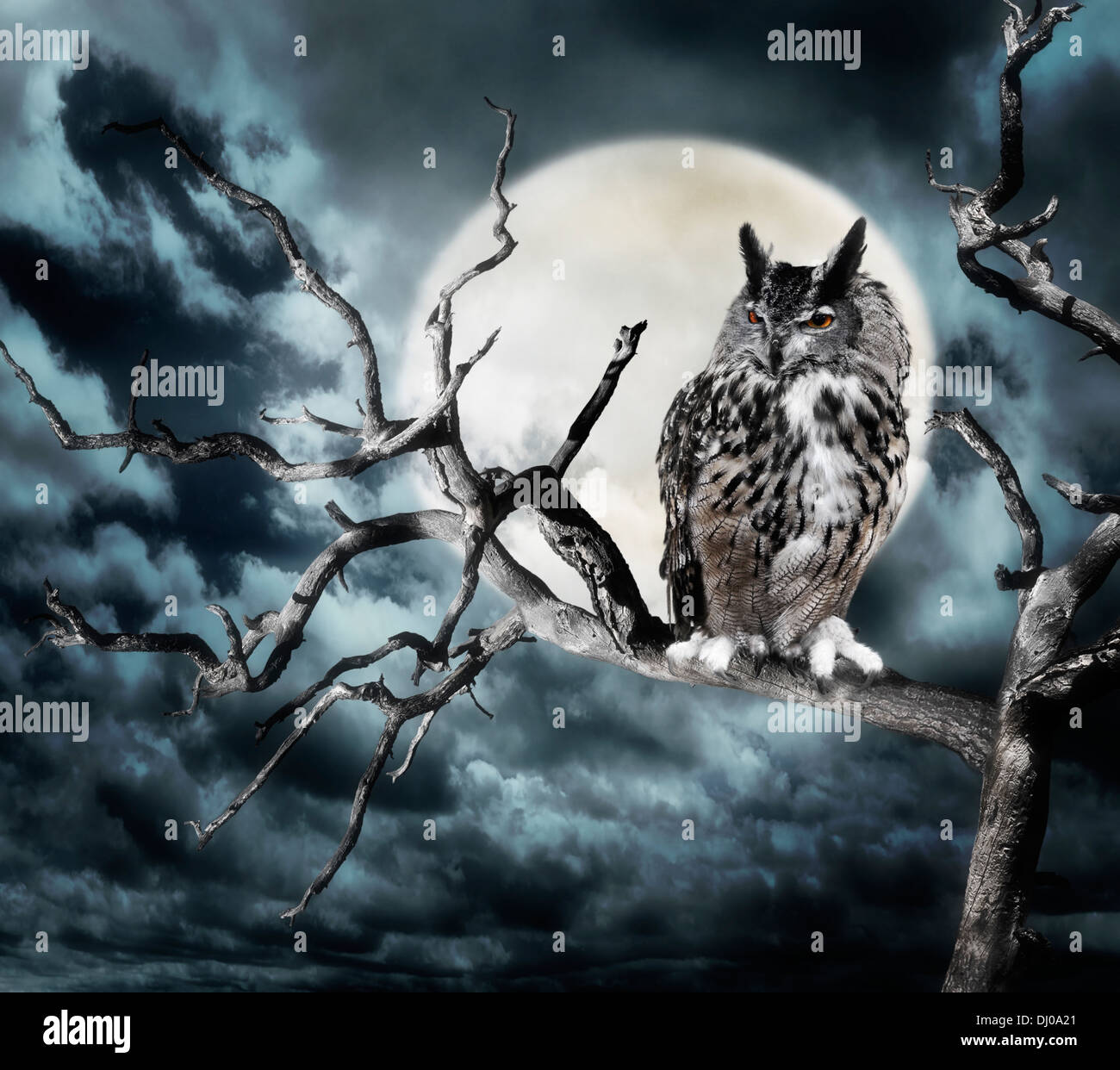 Owl Perching On A Tree Against The Moon - Stock Image
