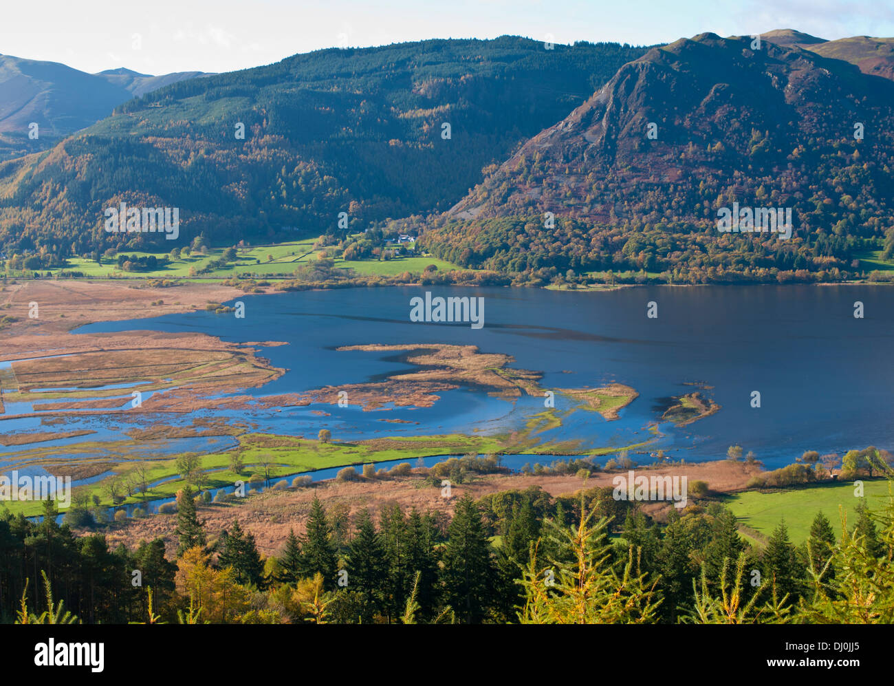 View across Lake Bassenthwaite from the upper slopes of Dodd Wood to Barf, Thornthwaite Forest behind, Autumn, Lake District, UK - Stock Image