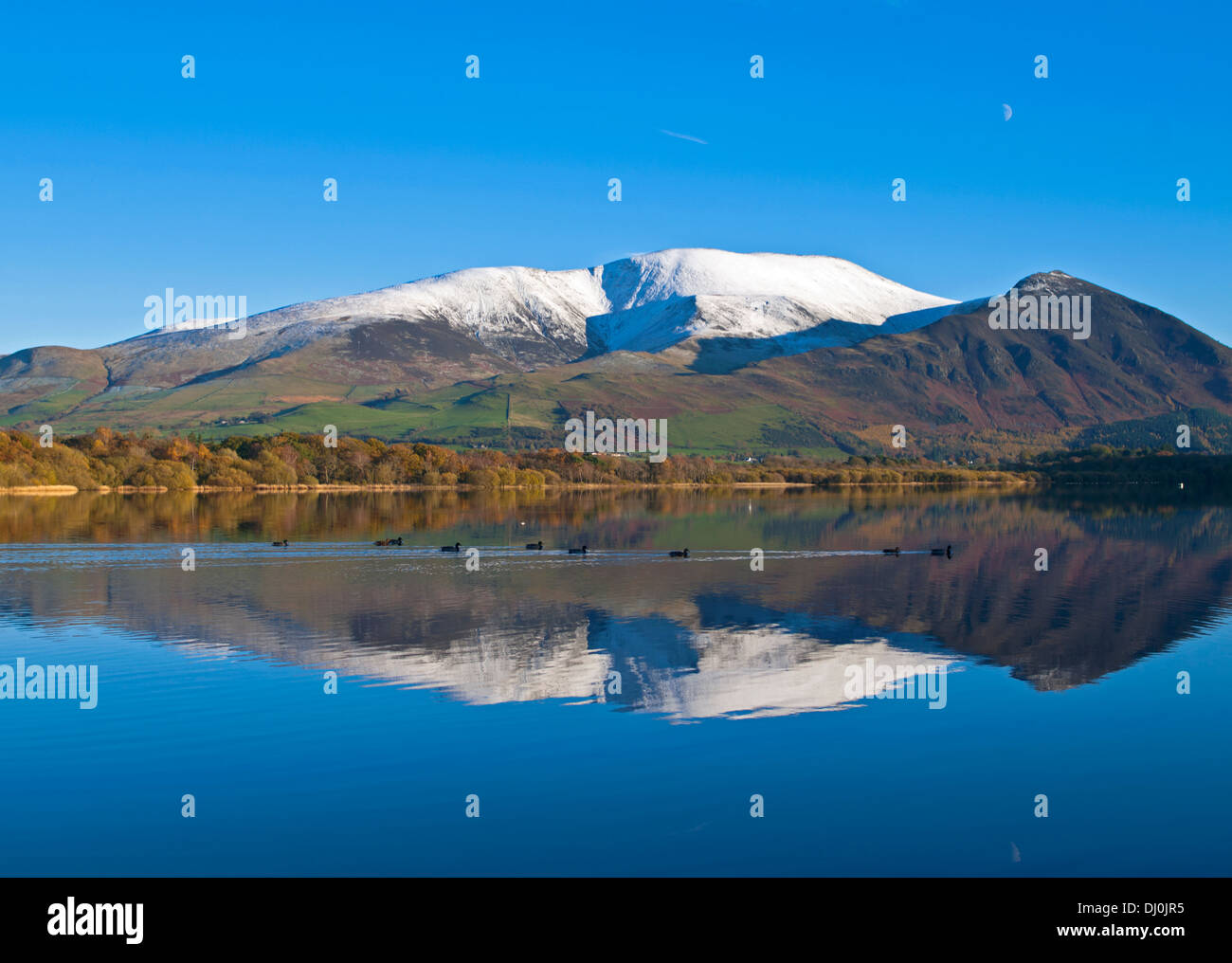 Autumn, Lake District, snow-capped Skiddaw and Ullock Pike are reflected in Lake Bassenthwaite, ducks swim across the calm water - Stock Image