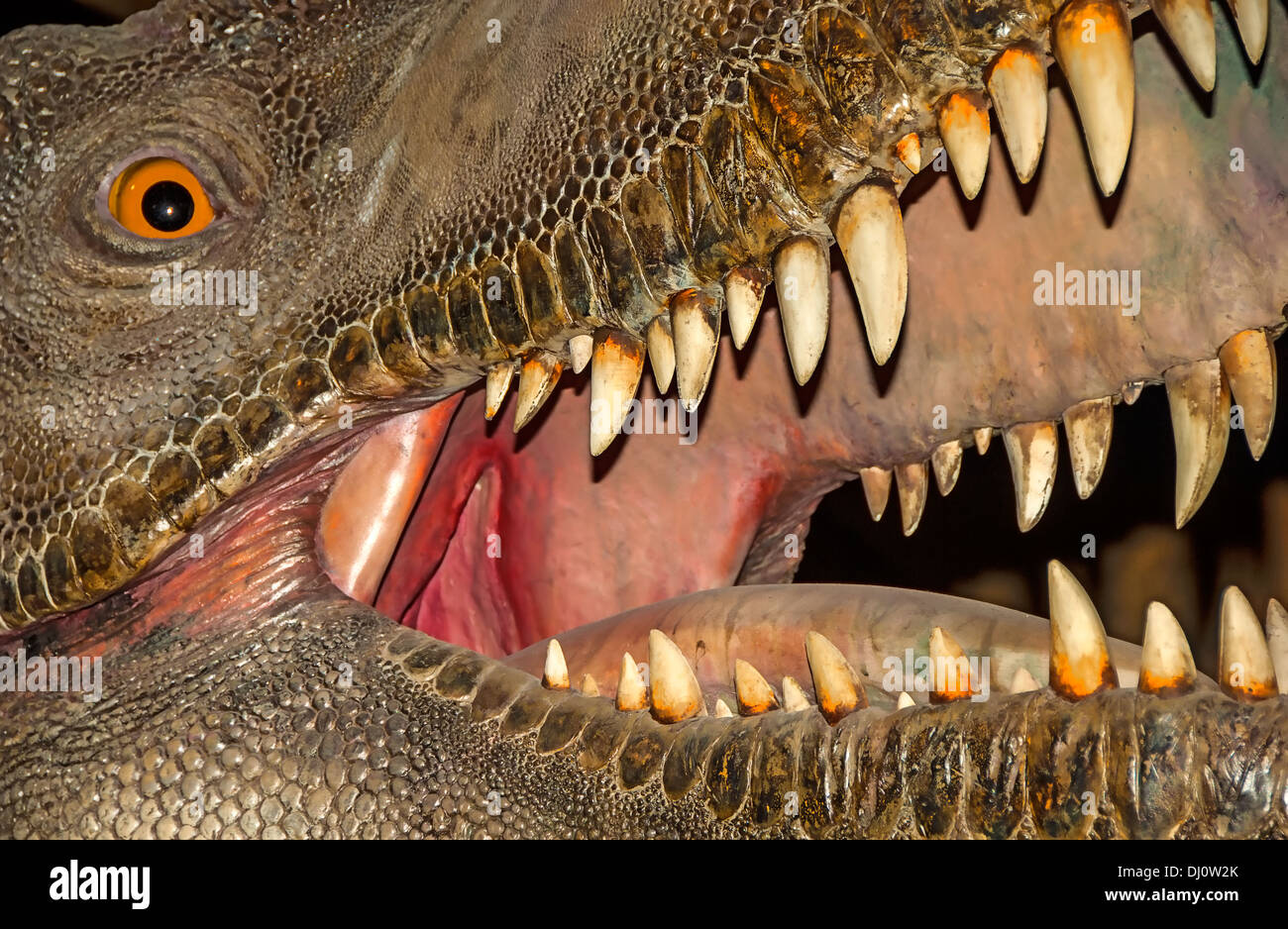 Tyrannosaurus rex was one of the largest meat-eating dinosaurs that ever lived and lived in North America. Stock Photo