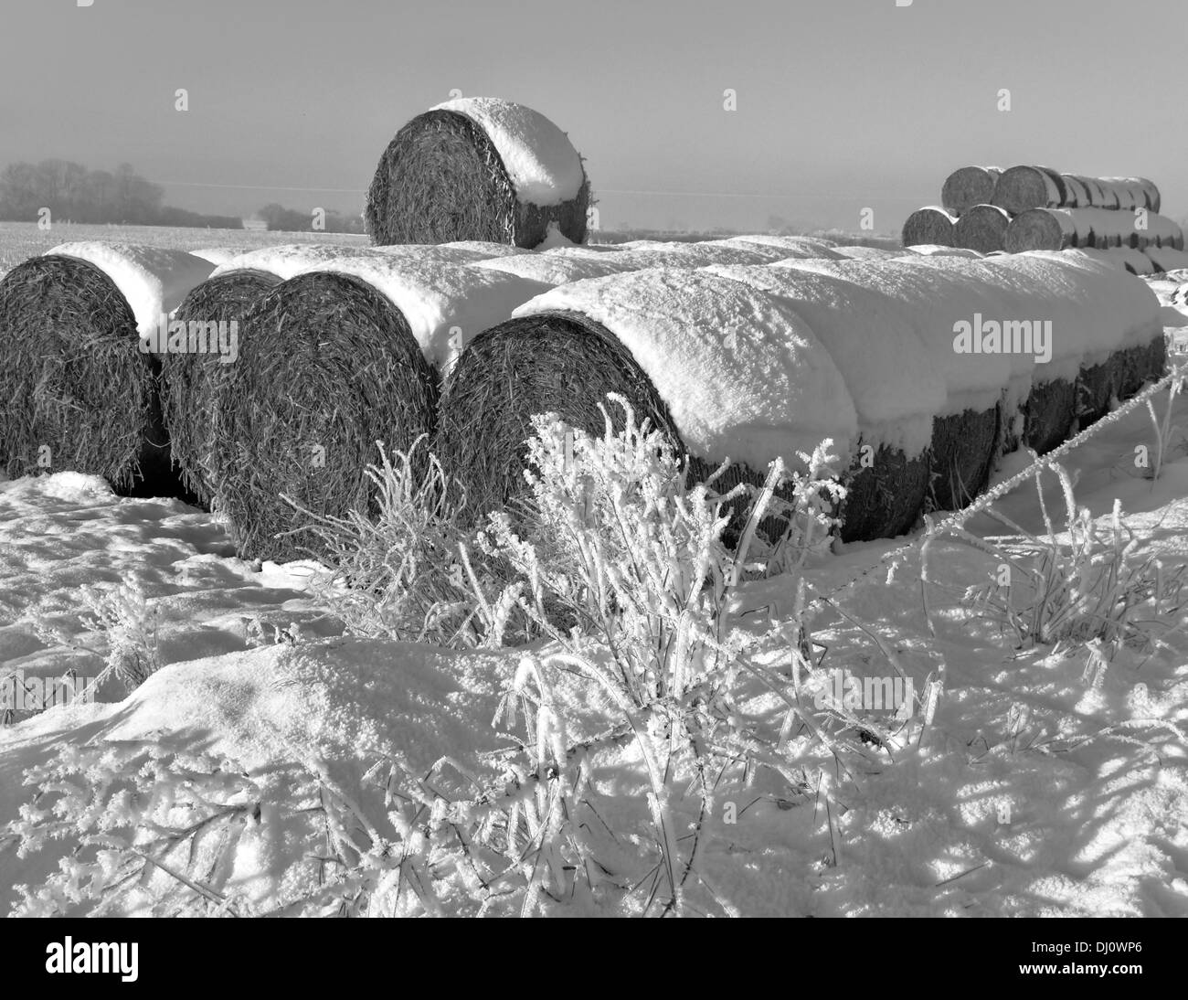 Hay Bails with Hoar Frost - Stock Image