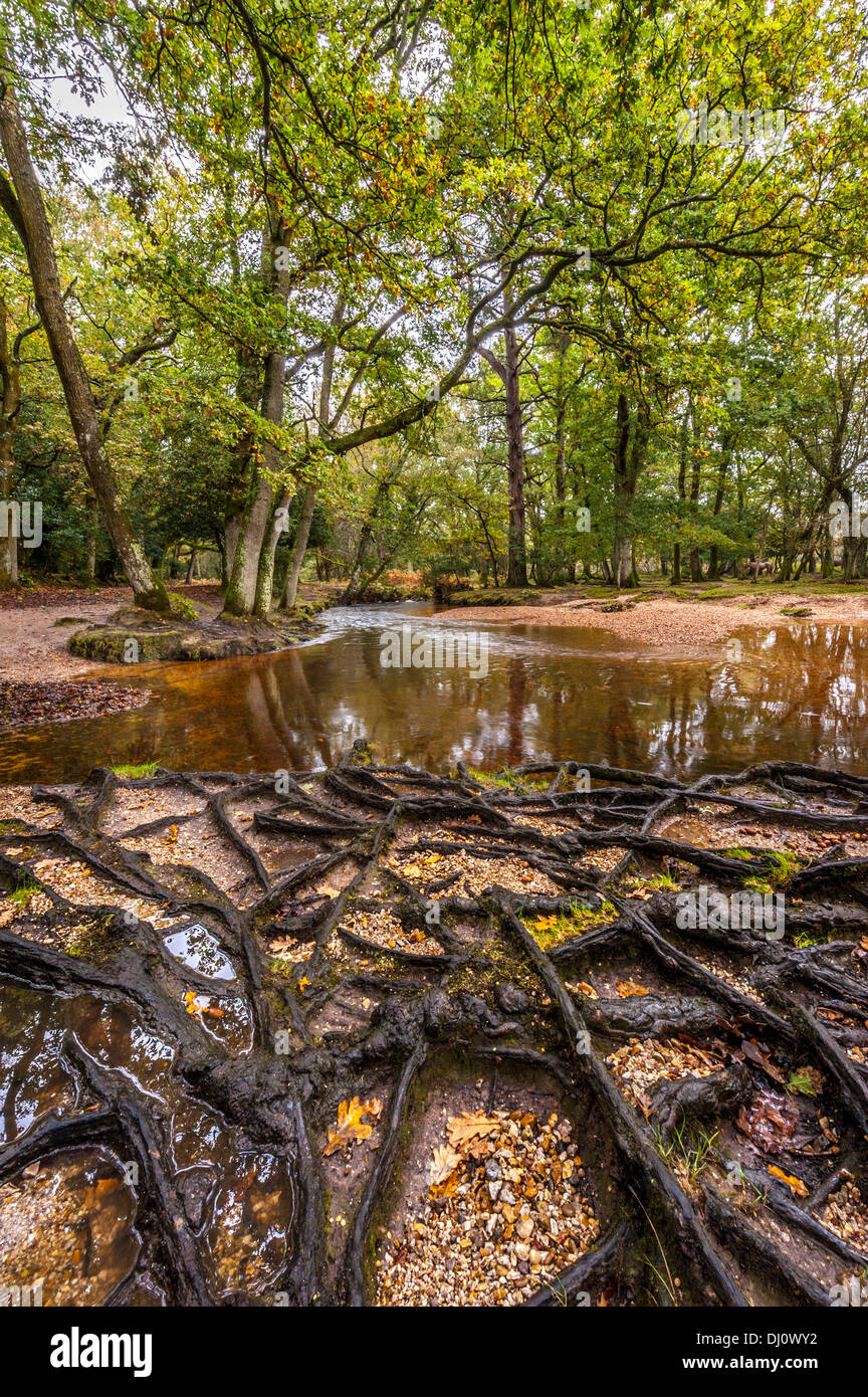 Ober Water New Forest Hampshire Stock Photo