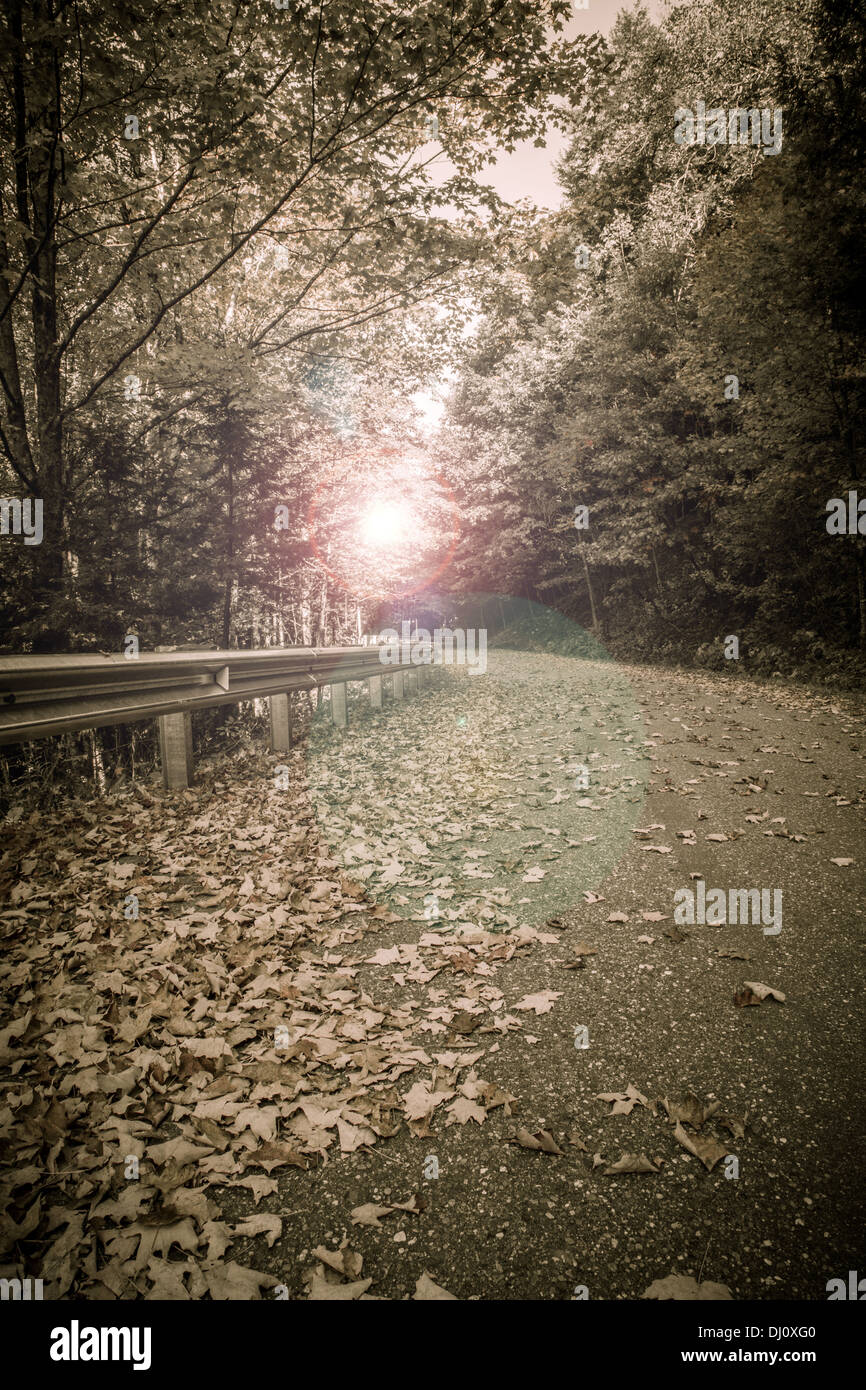 Sunflare at the end of a empty back country road full of fallen leaves. - Stock Image