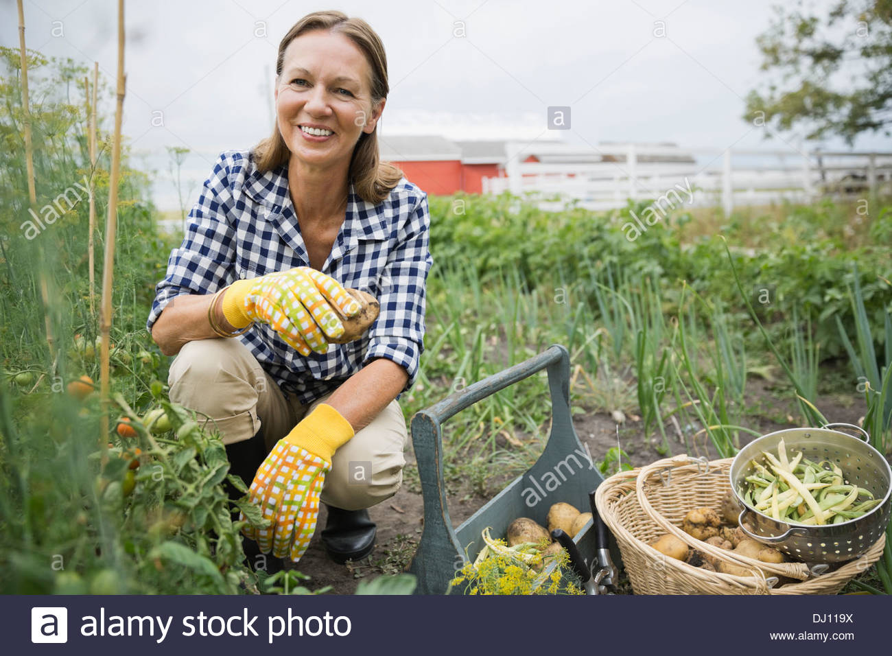 Portrait of senior woman harvesting vegetables - Stock Image