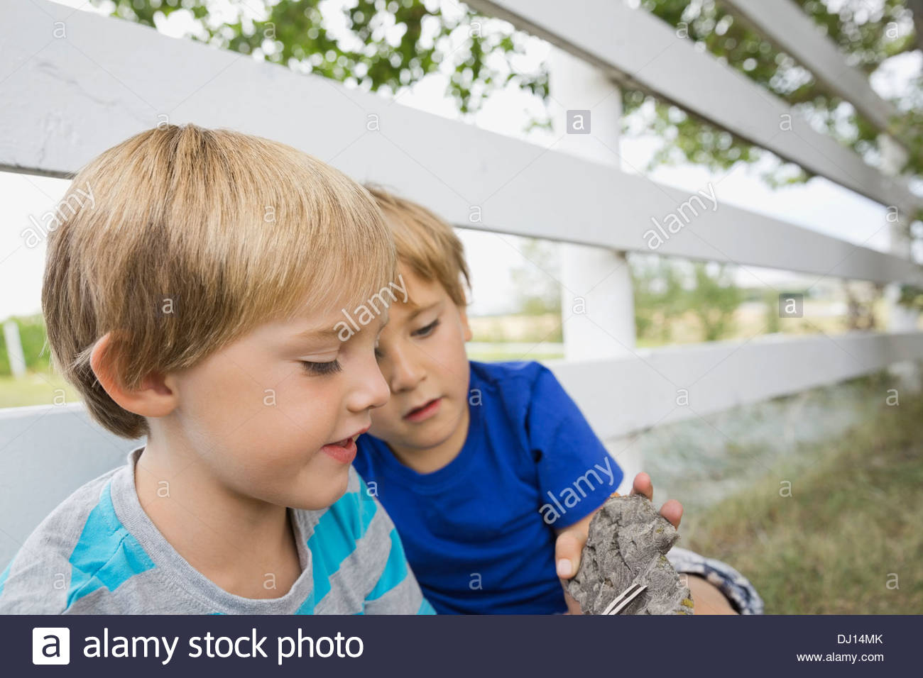 Young boys exploring tree bark - Stock Image