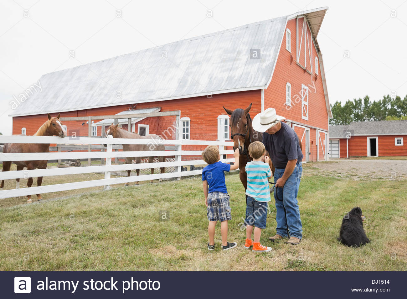 Grandfather showing grandchildren how to feed a horse - Stock Image