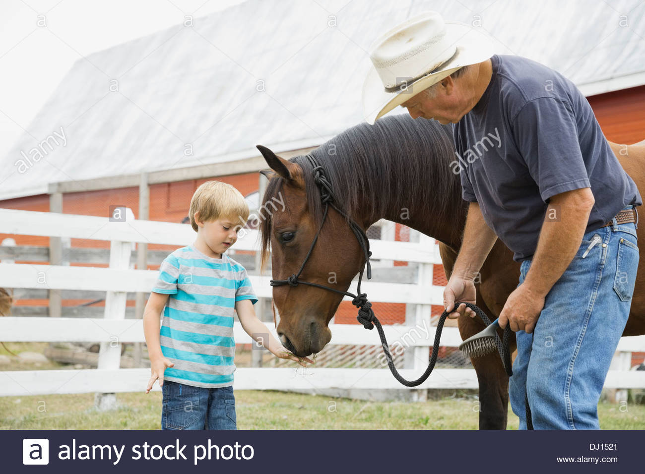 Grandfather with grandson feeding horse on farm - Stock Image