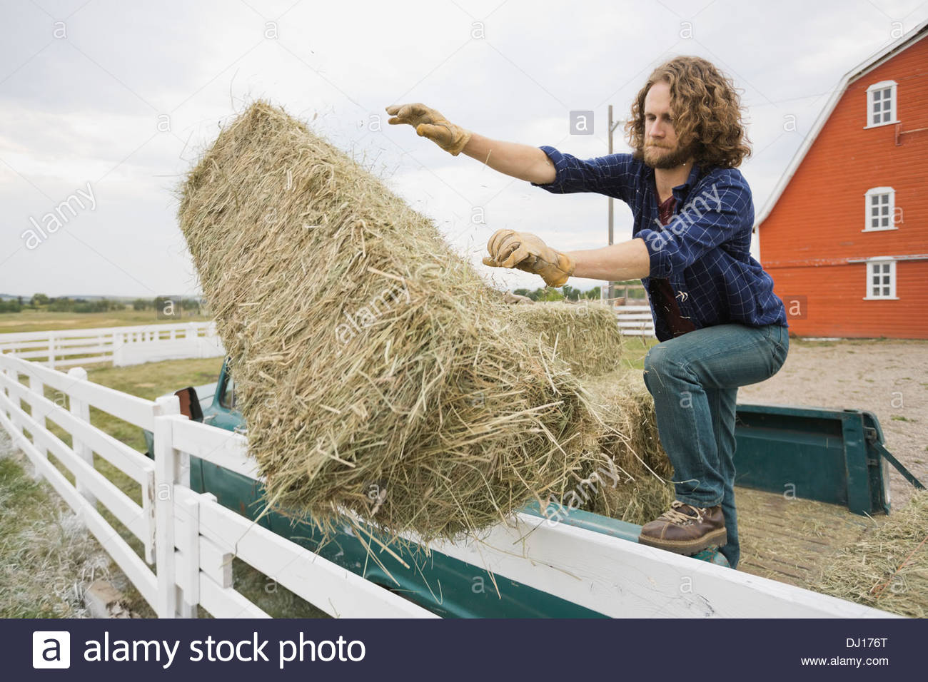 Man unloading hay bale from pick-up truck - Stock Image